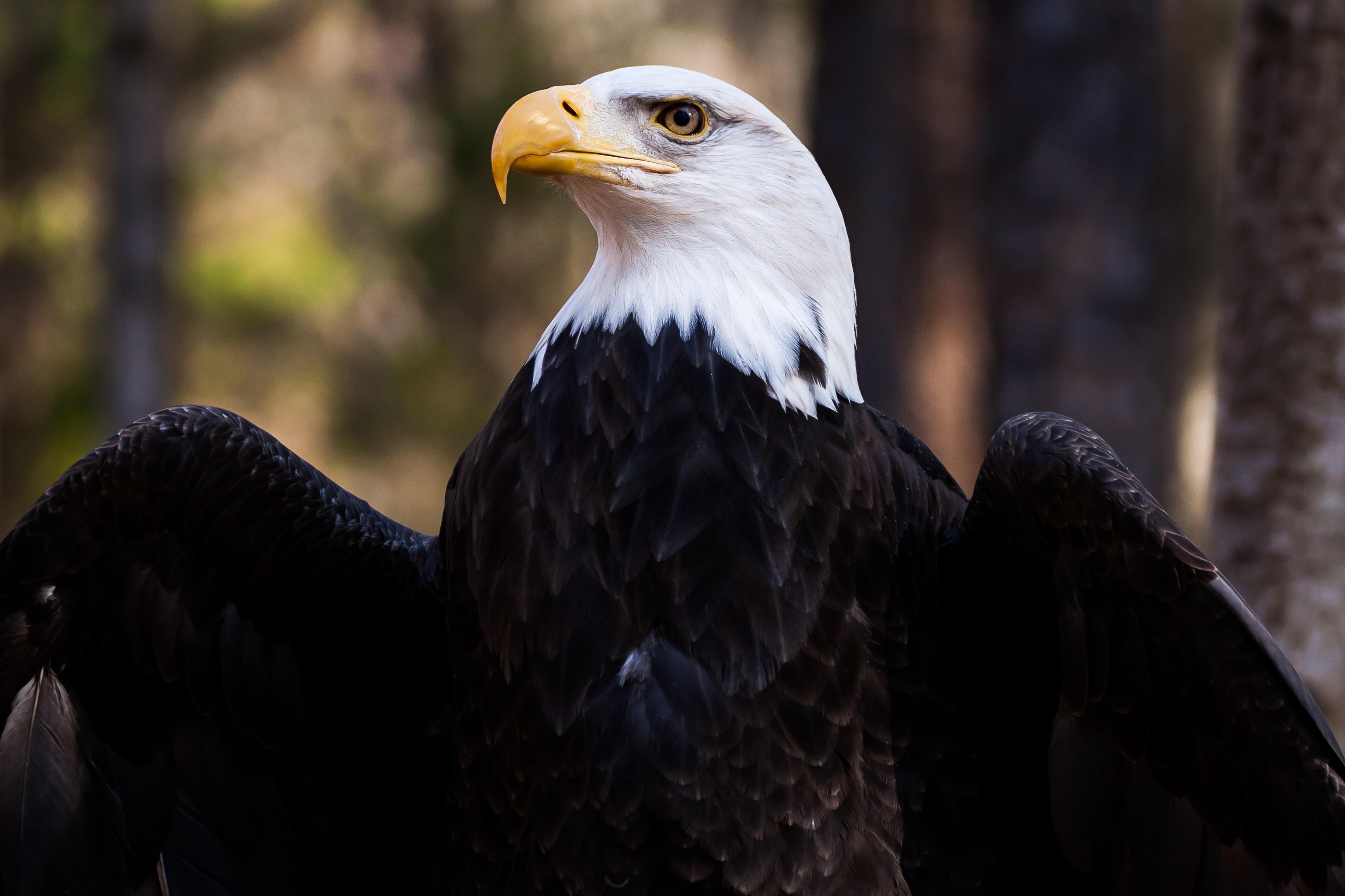 Найти картинку орла