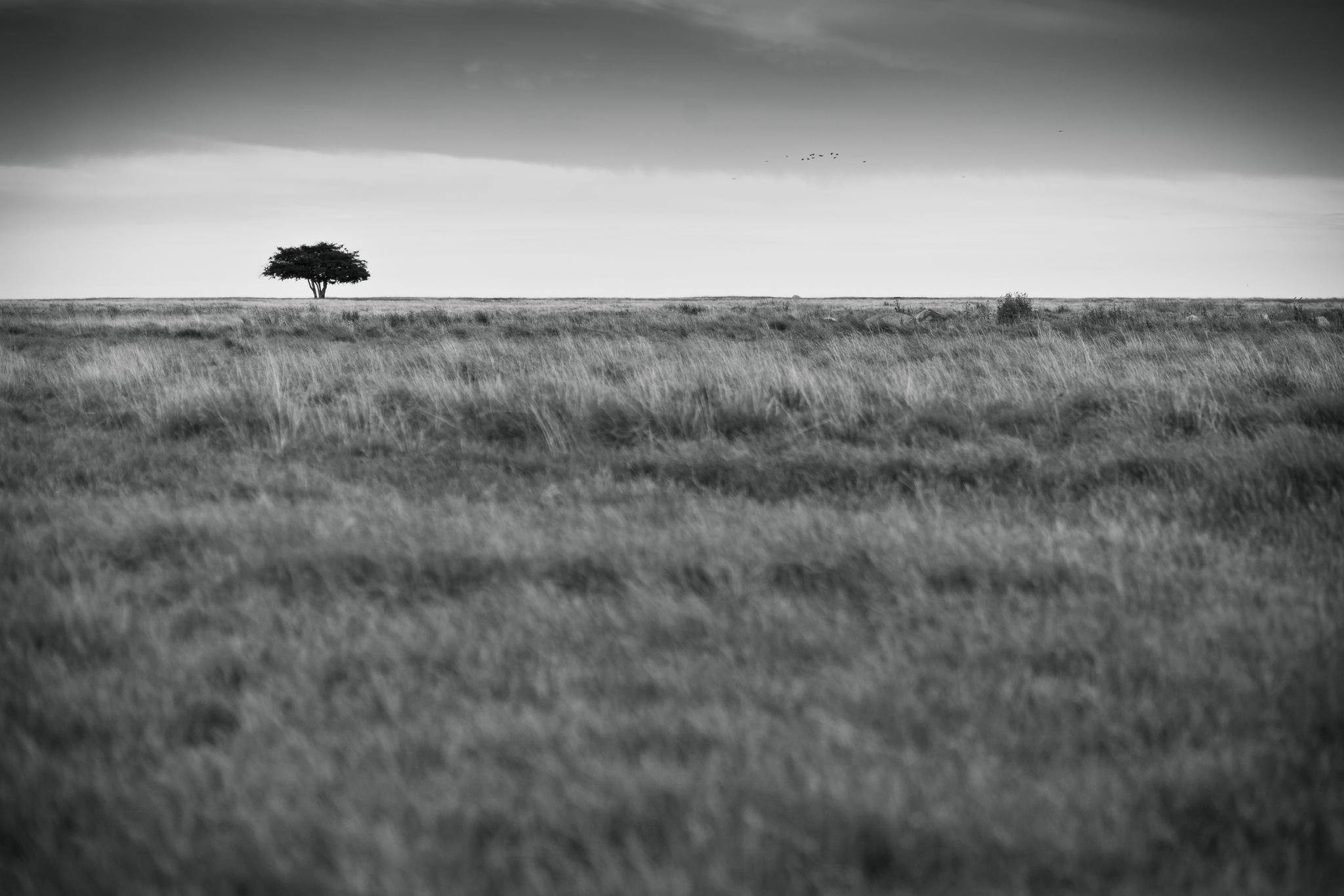 признал равнины картинки черно-белые выбрали