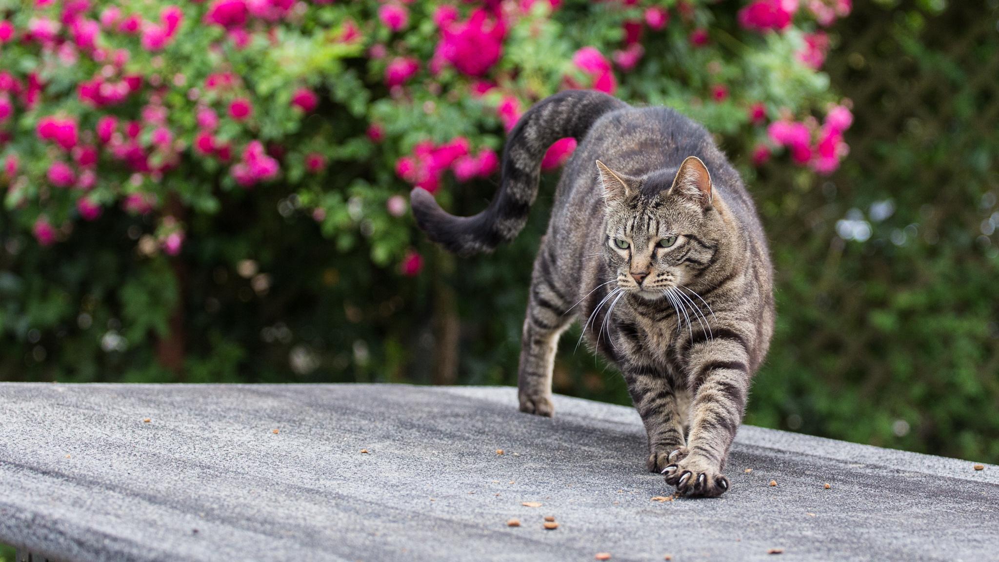 Широкоформатные фотографии кошек