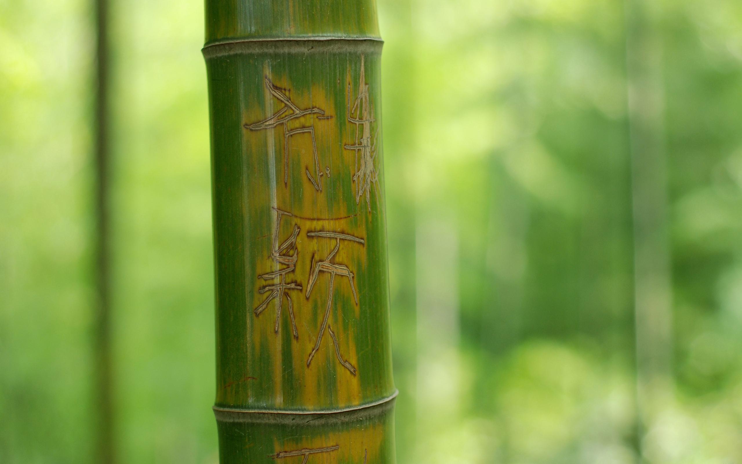 обои на телефон бамбук