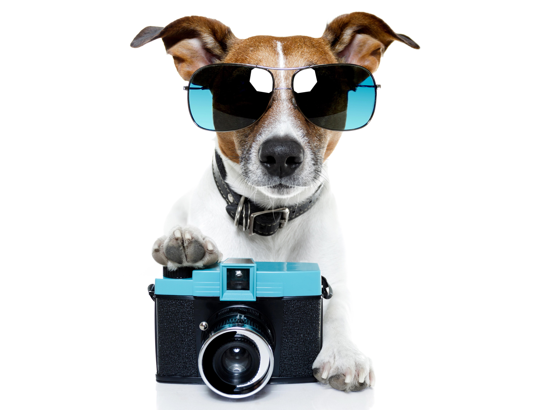прикольные картинки с собачками джек рассел