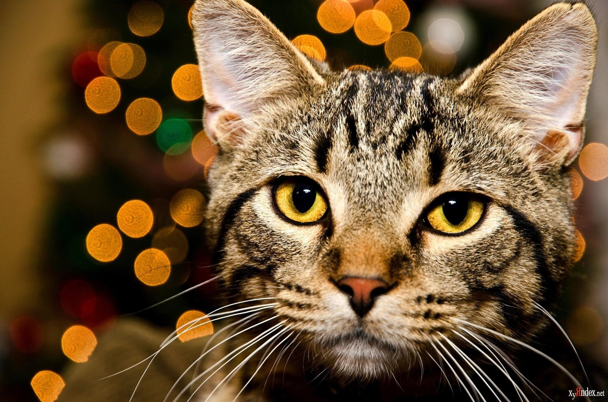Картинки котов на фото