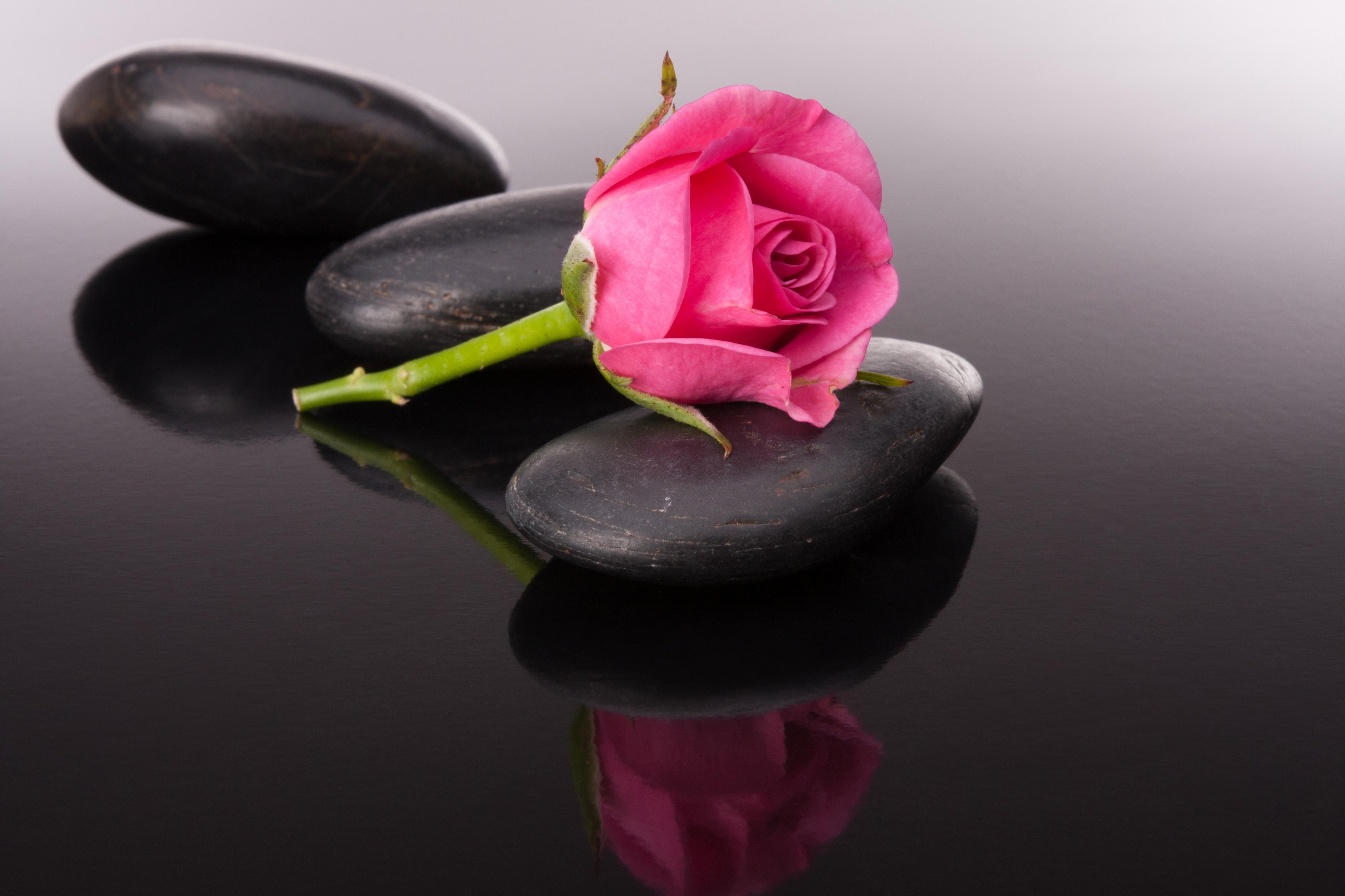 красивые картинки на черном фоне высокого качества процесс приводит тому