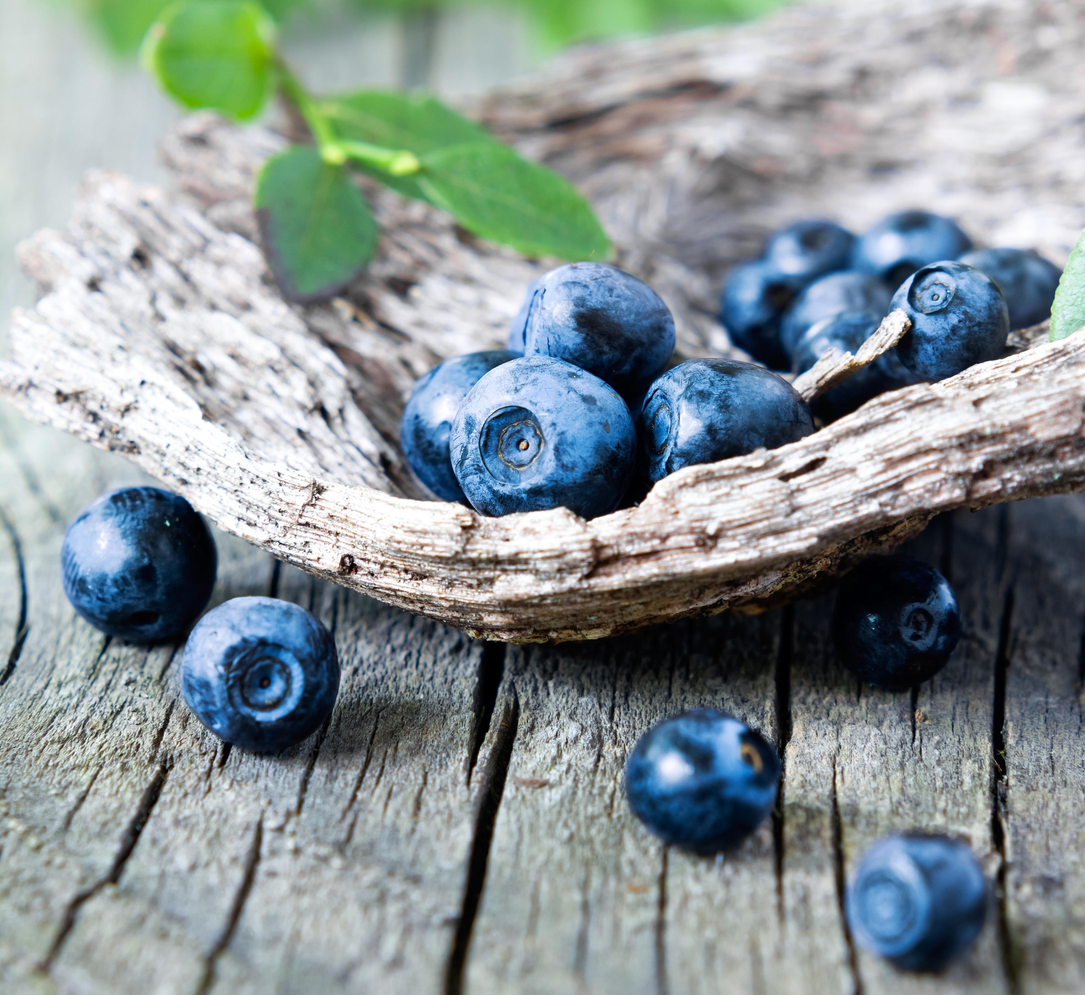 Обои черника, wood, berries, голубика, Blueberry. Еда foto 10