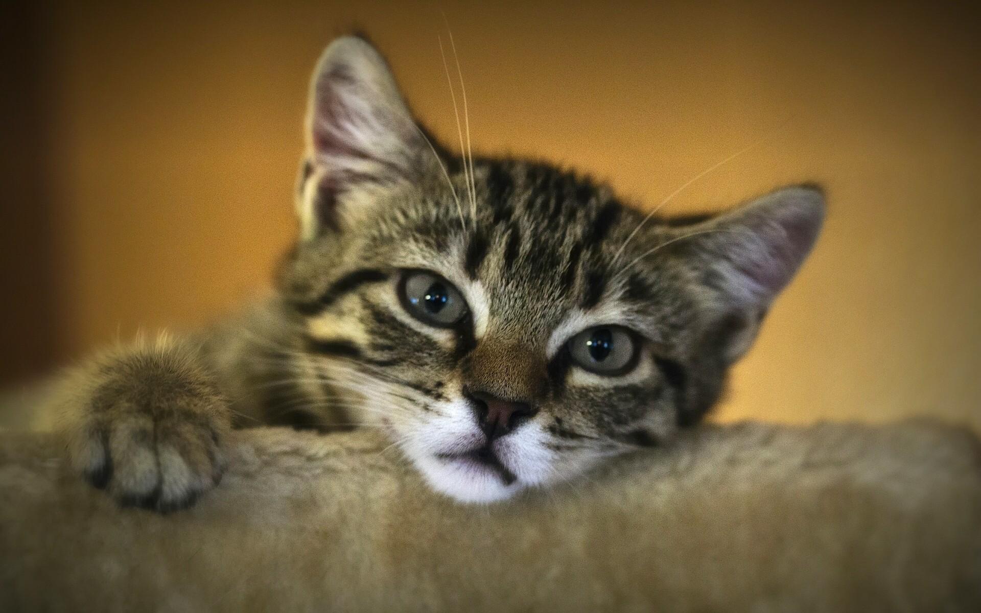Фото грустных кошек