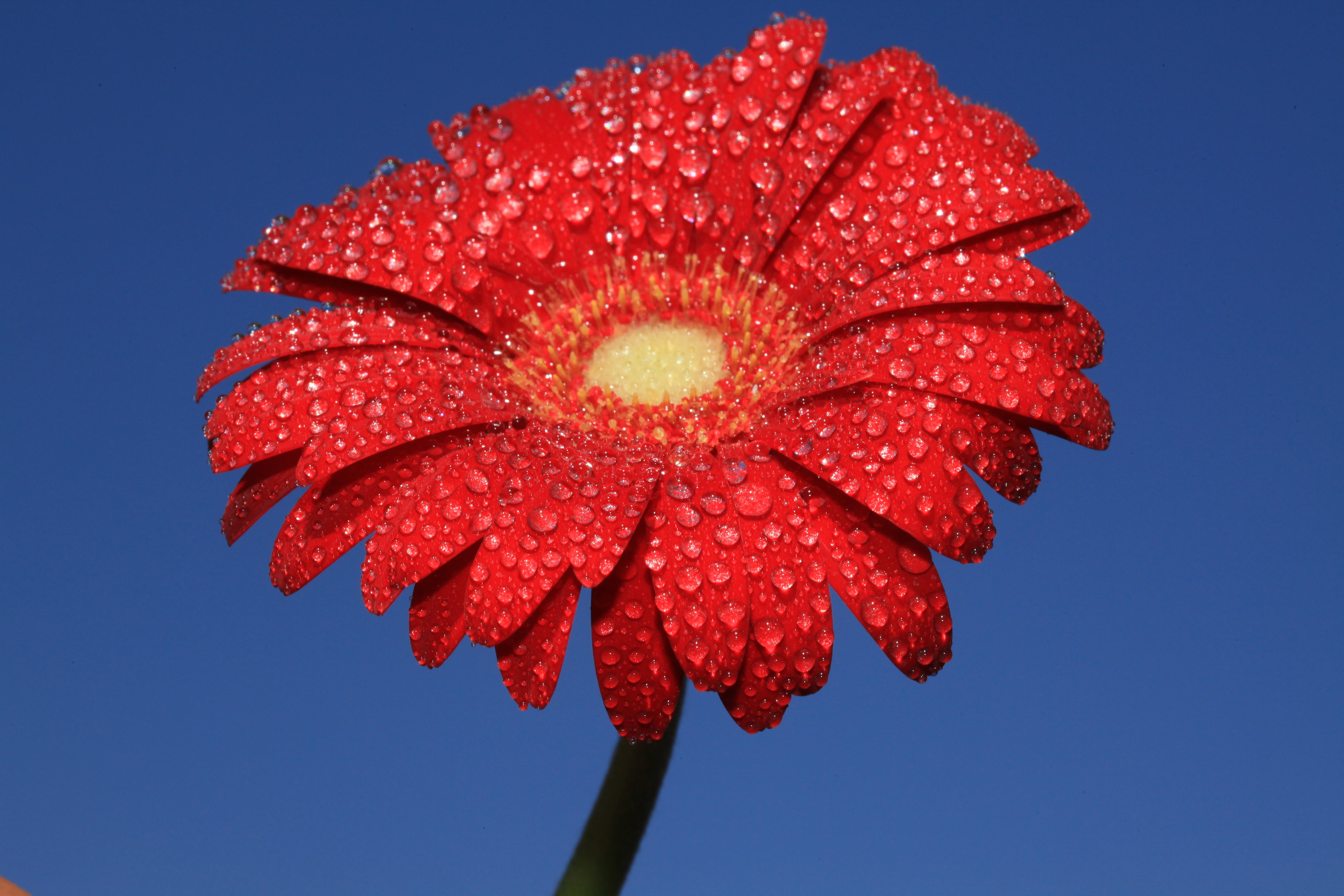 кране установить картинки цветы известно