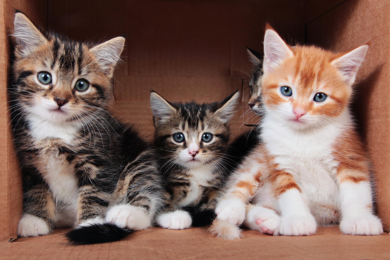 посмотреть фотографии про котят несколько