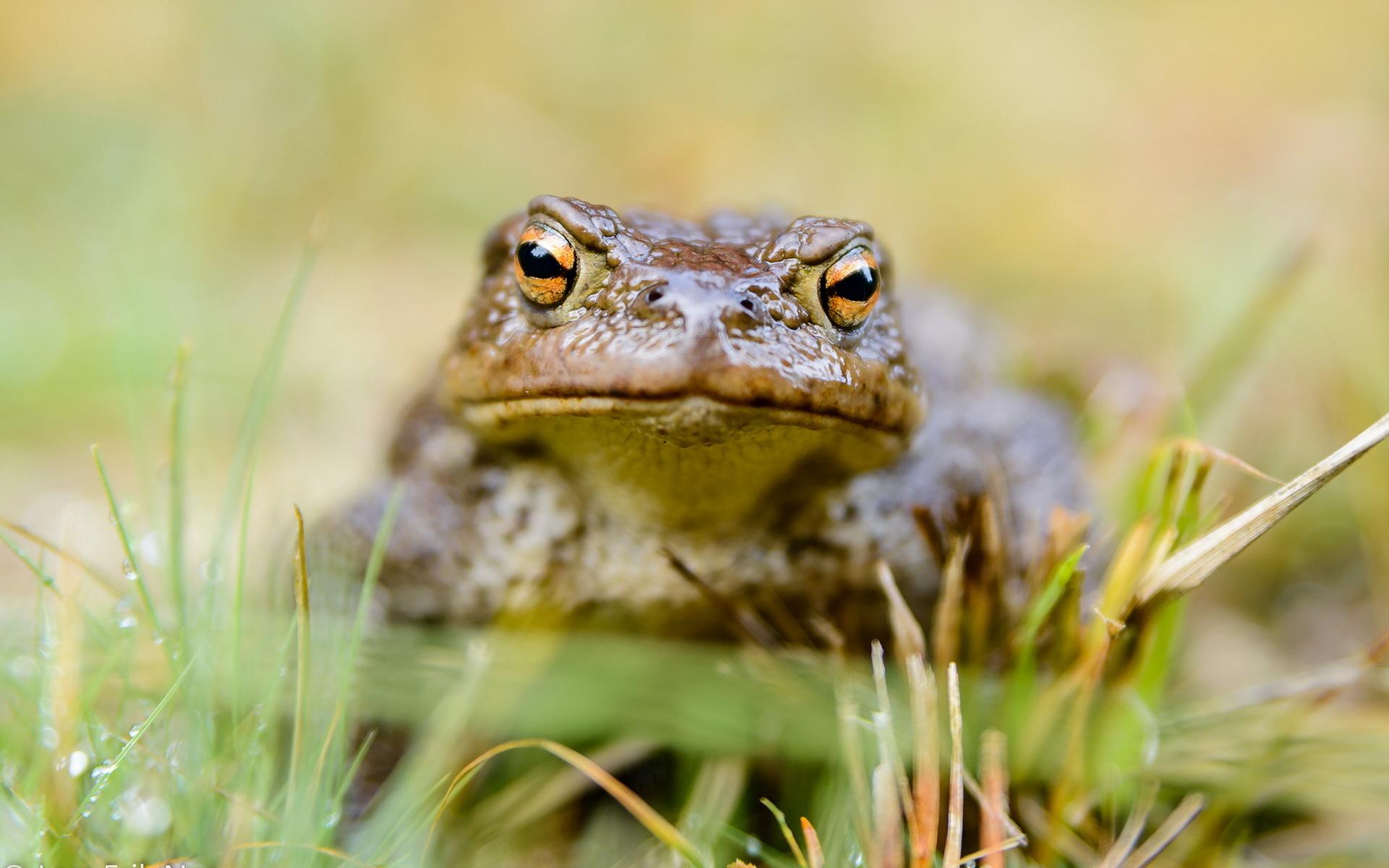 красивая картинка жабы