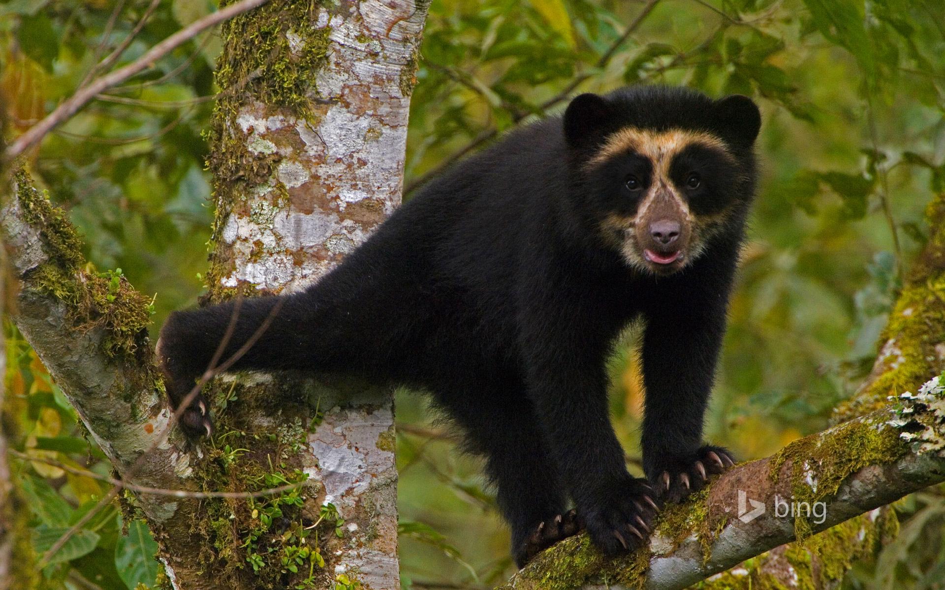 стоимость профессиональной животные южной америки фото с названиями россияне