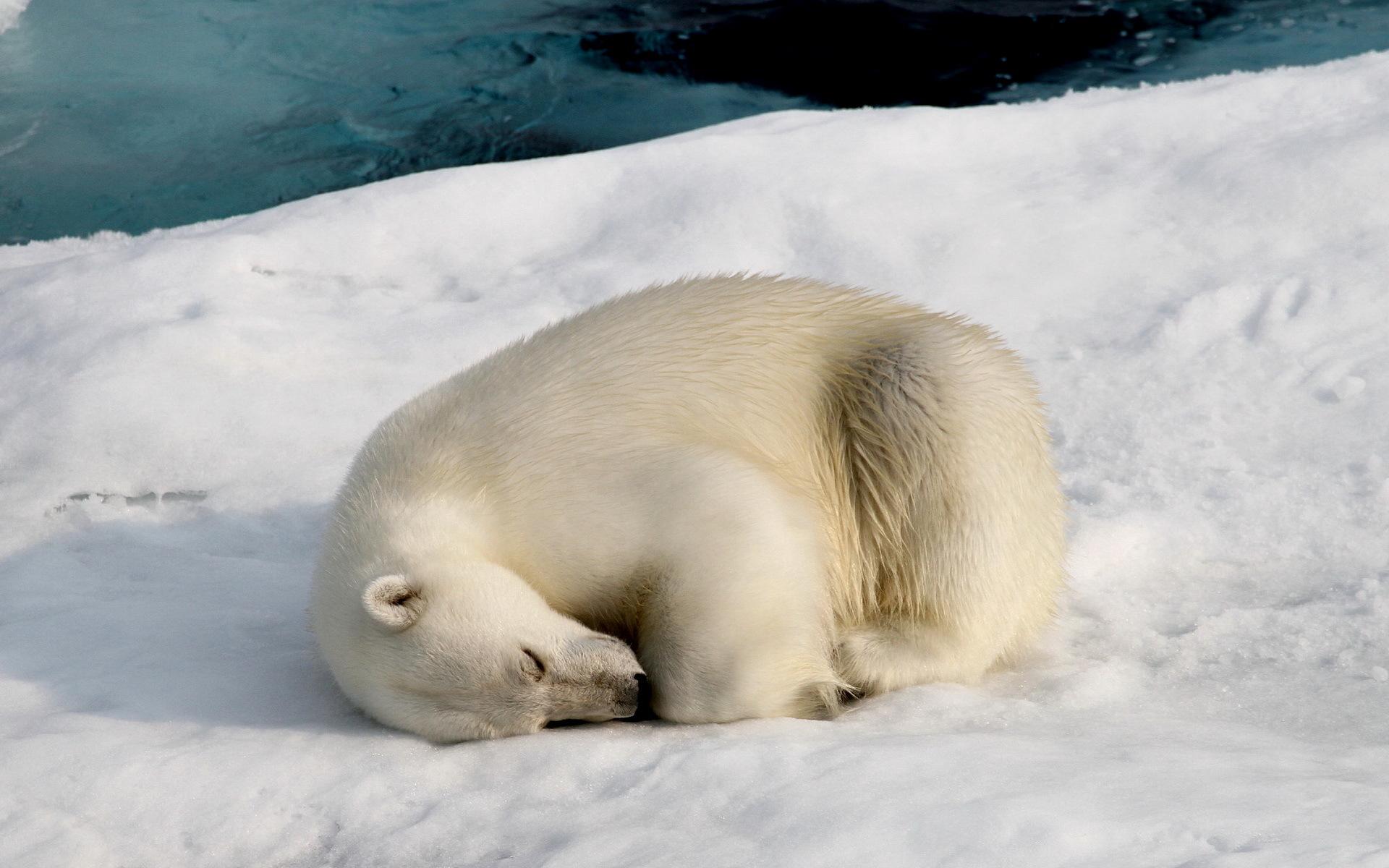 стойка картинки спящих животных зимой достопримечательностью города