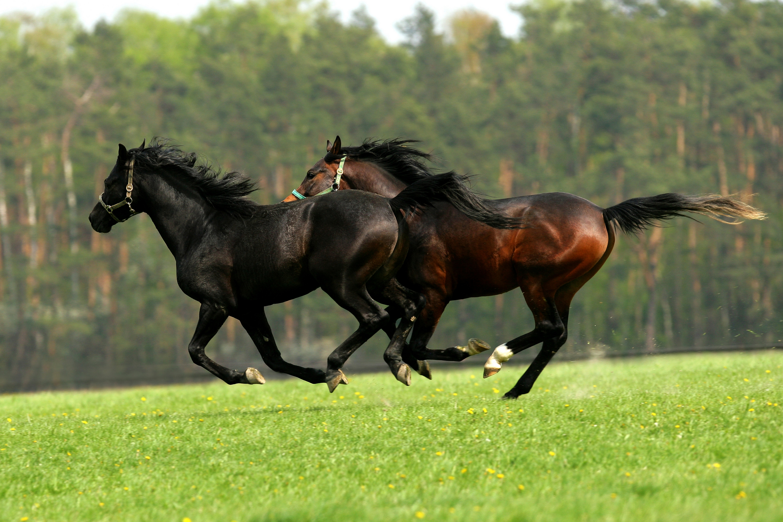 Бег коней картинки