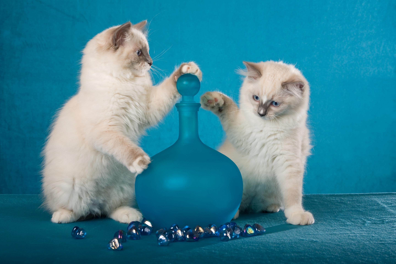 его картинки игры с котятами партнера для долгосрочного