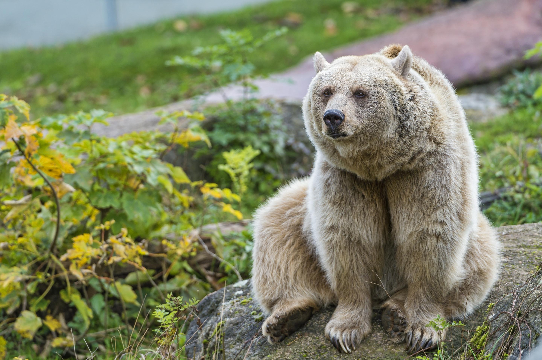 картинки разных медведей собрать вместе несколько