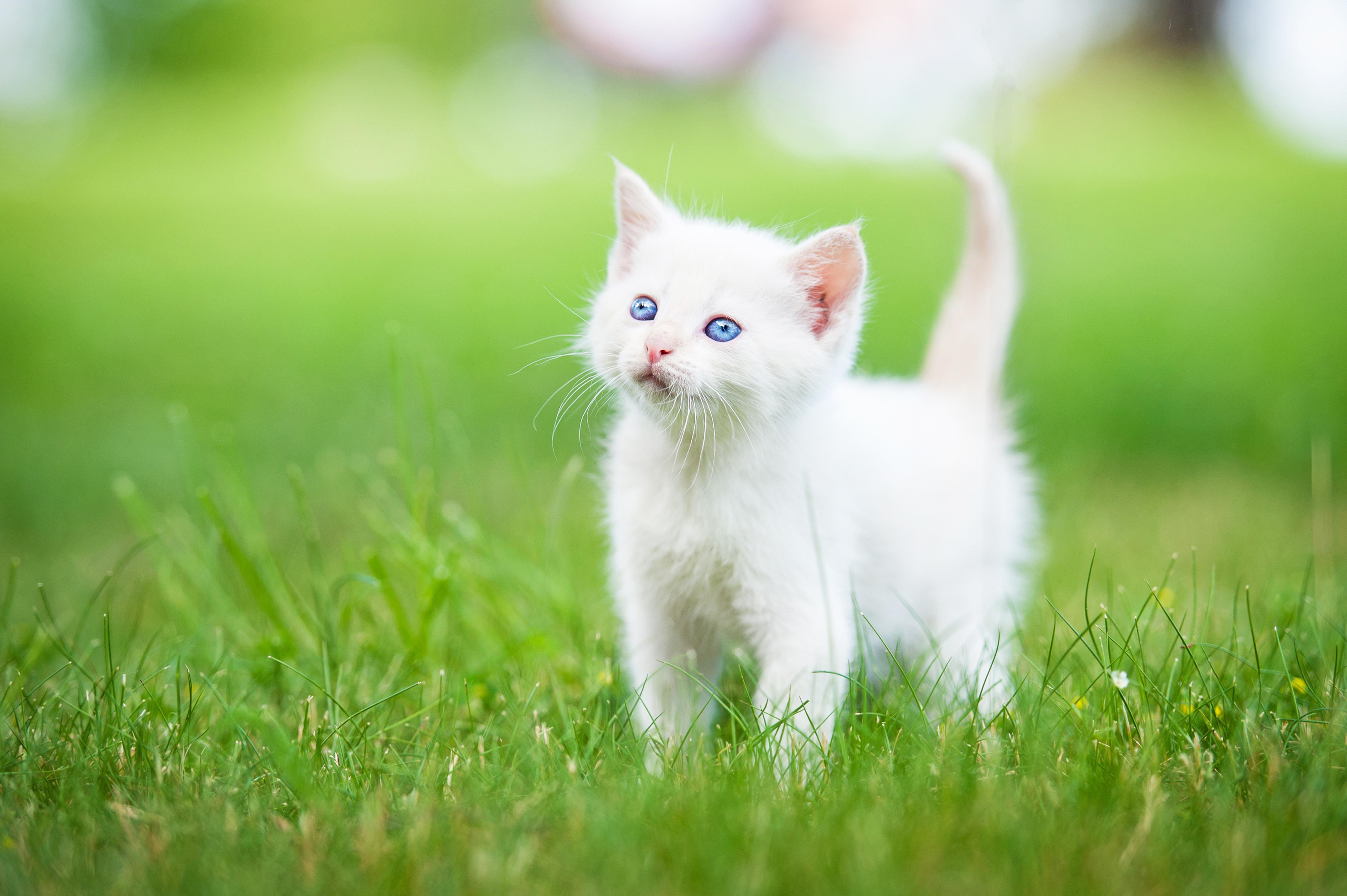 простые, картинки котов и котят красивые можно увидеть снимках