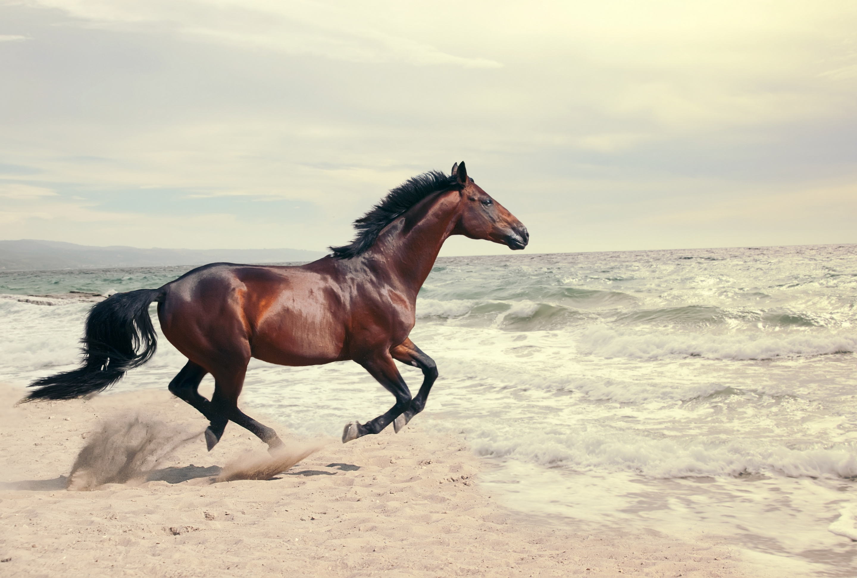 застукала а кони все бегут картинки обои