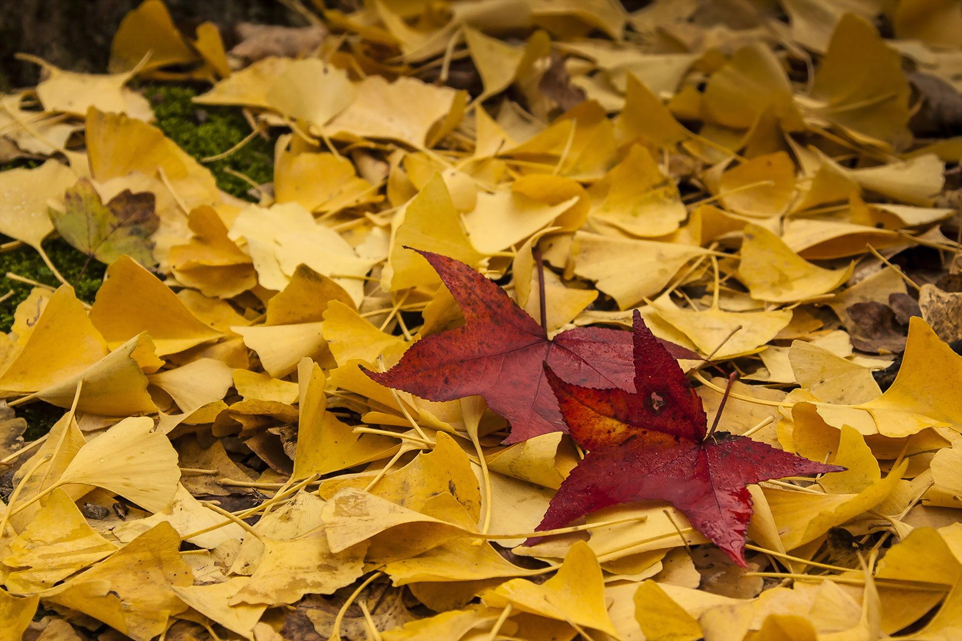 картинки осень листья падают красивые этого