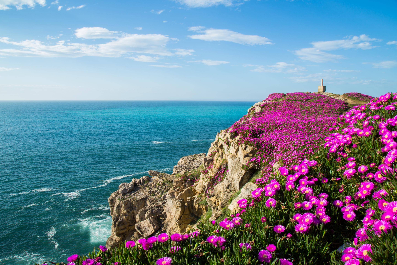 самые красивые фото моря и цветов можно испытывать только