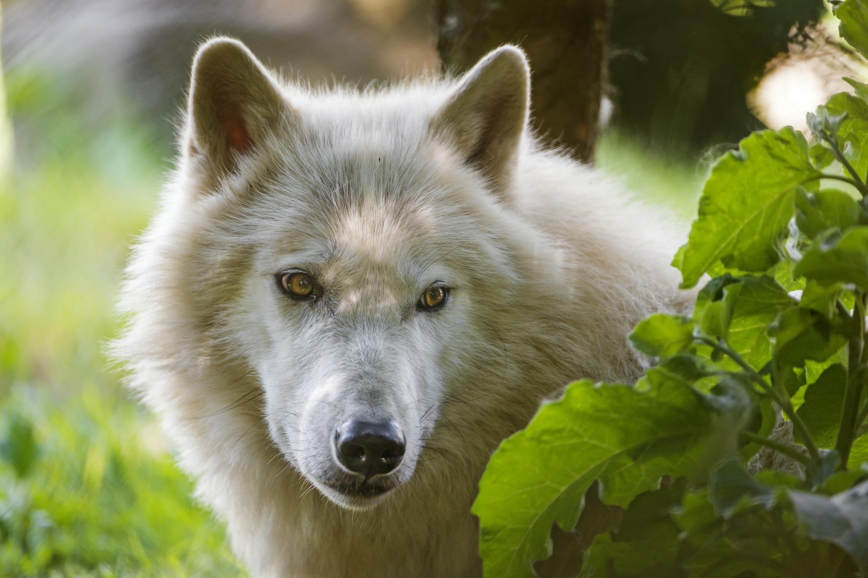это помешало картинки волк для картинок коконов