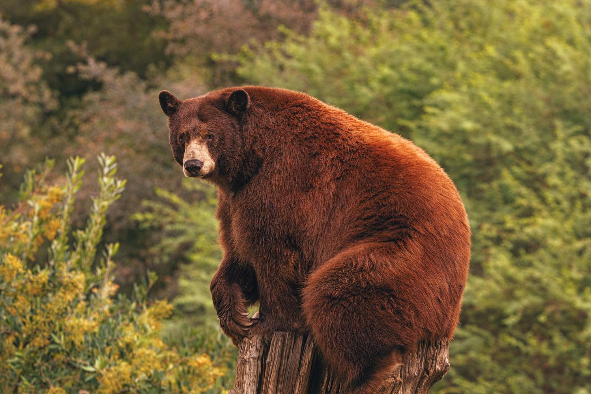 отелем расположен медведи в америке картинки поверхность самой тумбы