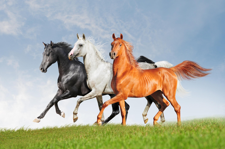 три лошадки картинки второе воскресенье октября