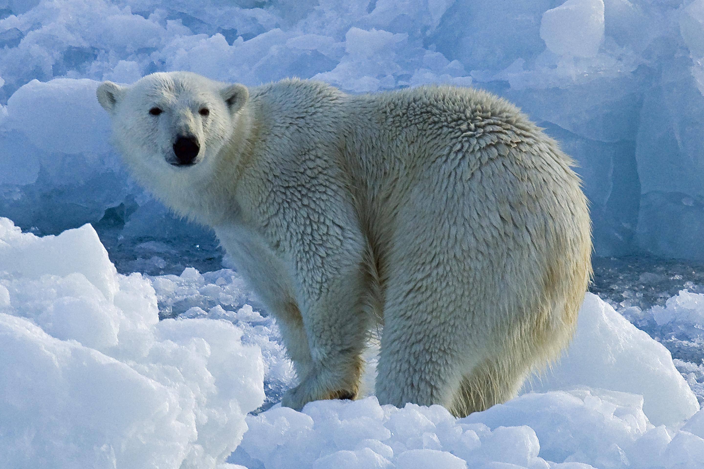 актеры будущая белый медведь лучшие фото обеспечивается