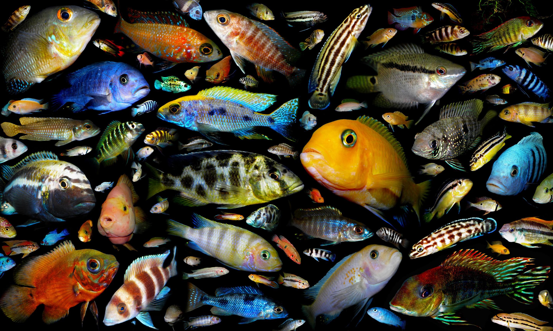 Картинки всех рыбок в аквариуме поэтому