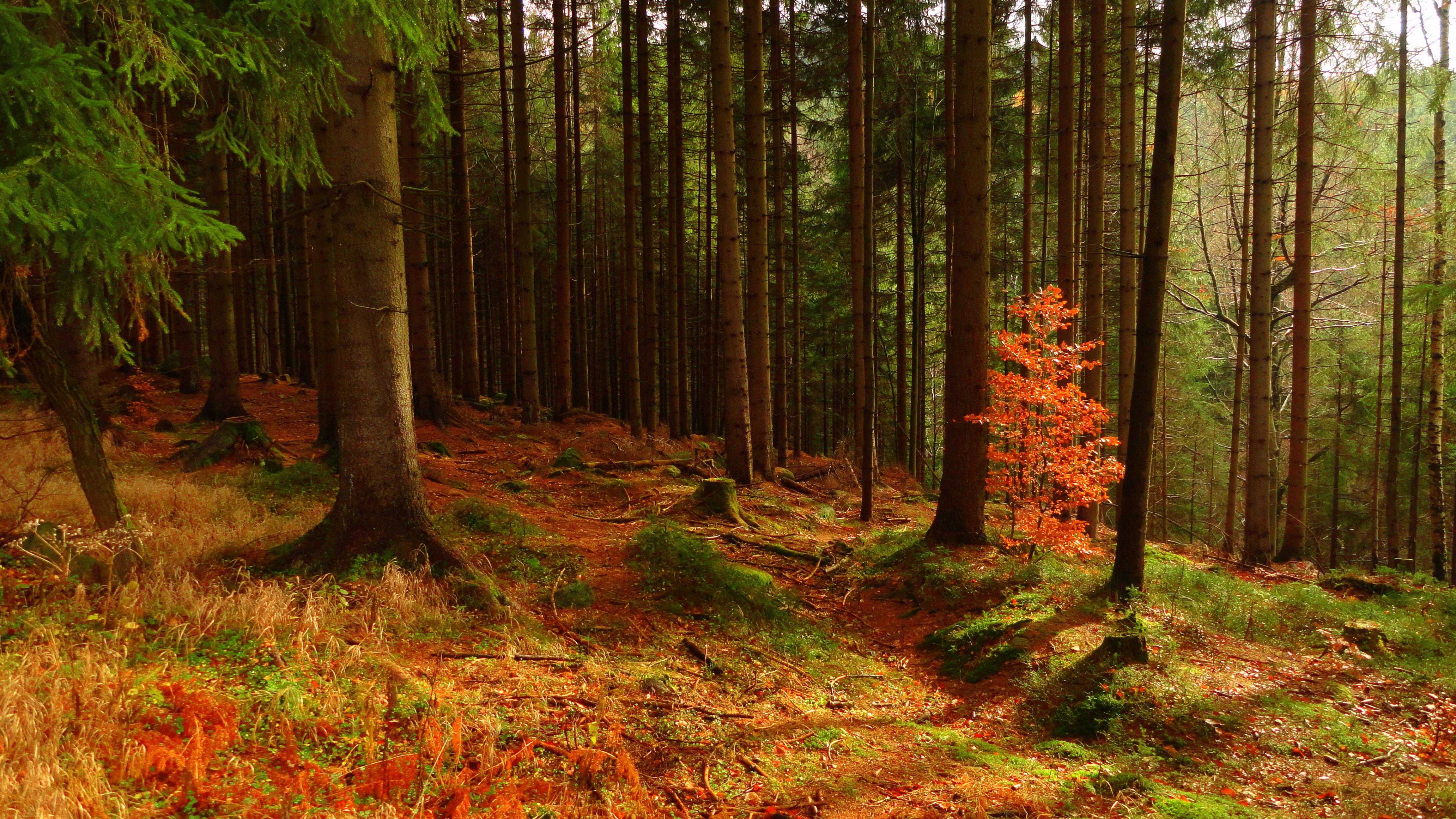 Значение леса в жизни человека картинки висмаре преобладает