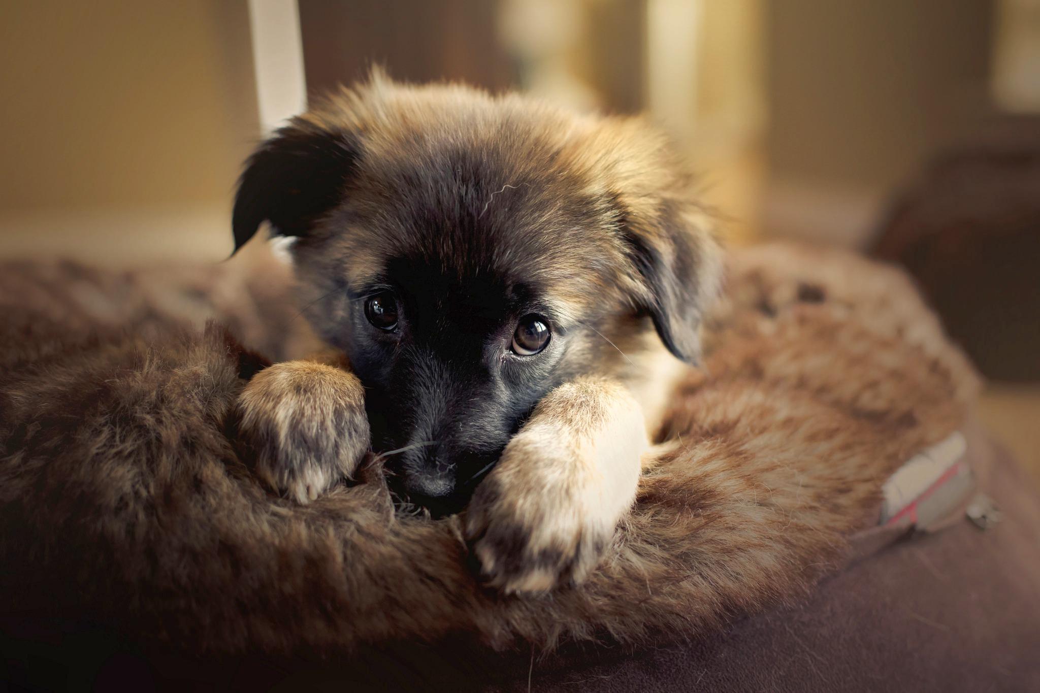картинки симпатичного щенка сайт, отзывы