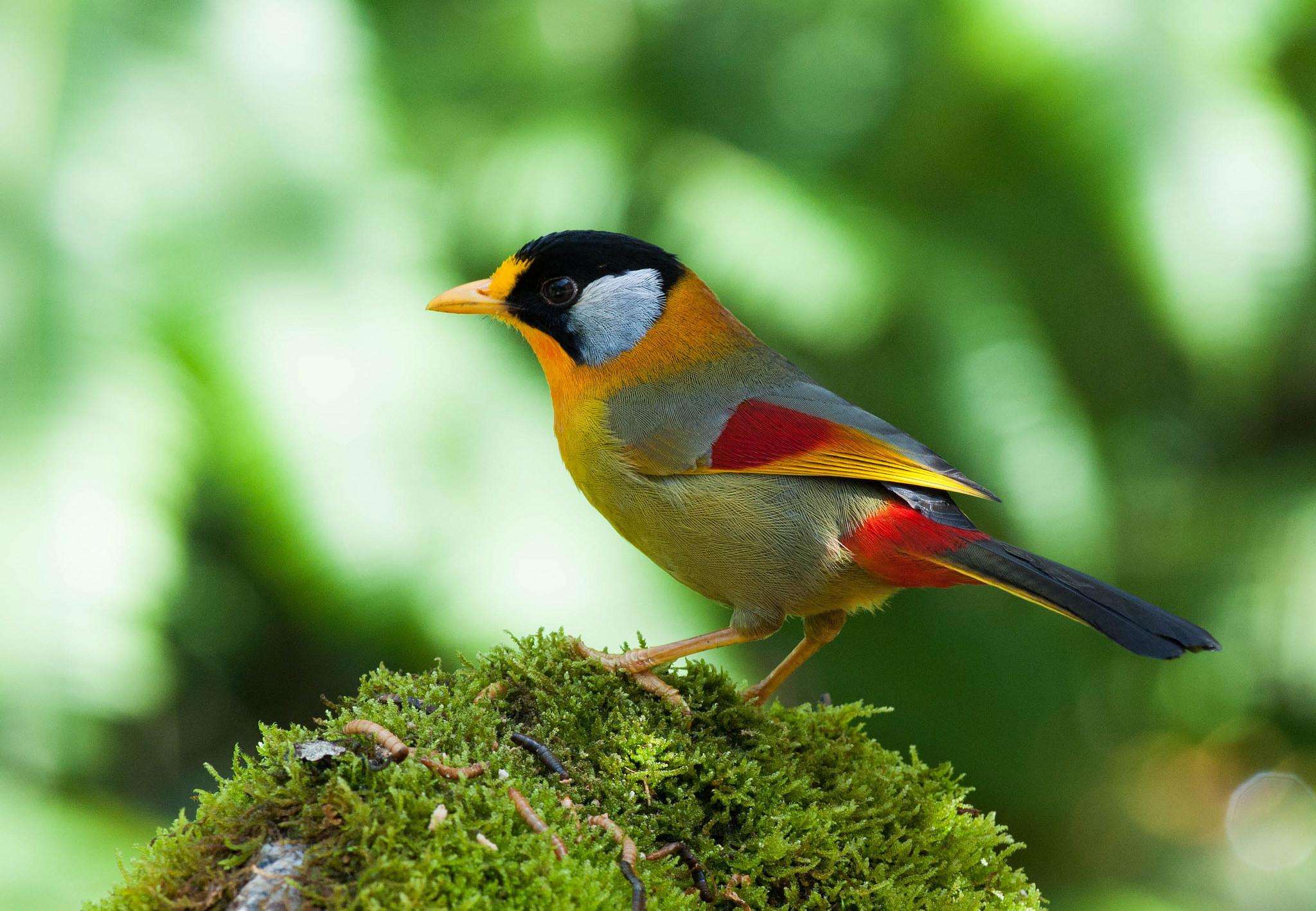 фотоаппарат получает изображение птиц на фото картинках для платьев подобной