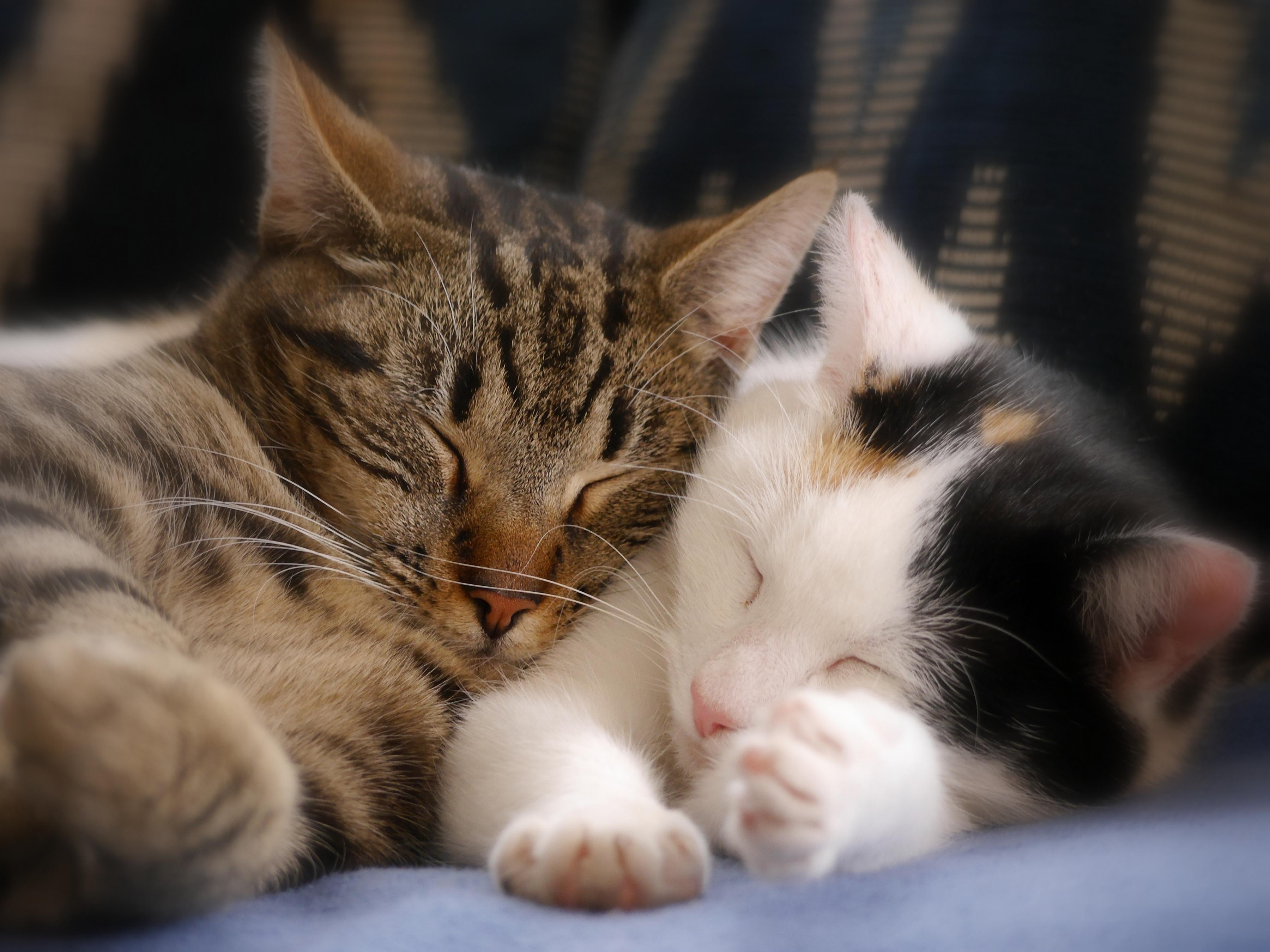 именно эти картинки спящие котята покупайте продавайте авто
