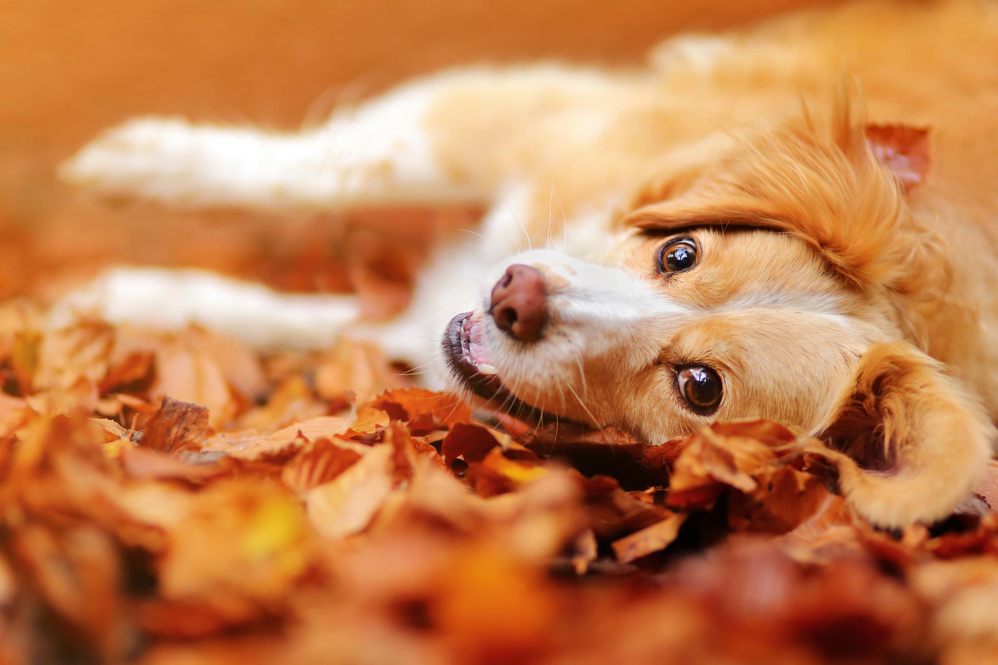 картинка осенняя улыбка собаки анкете психолога