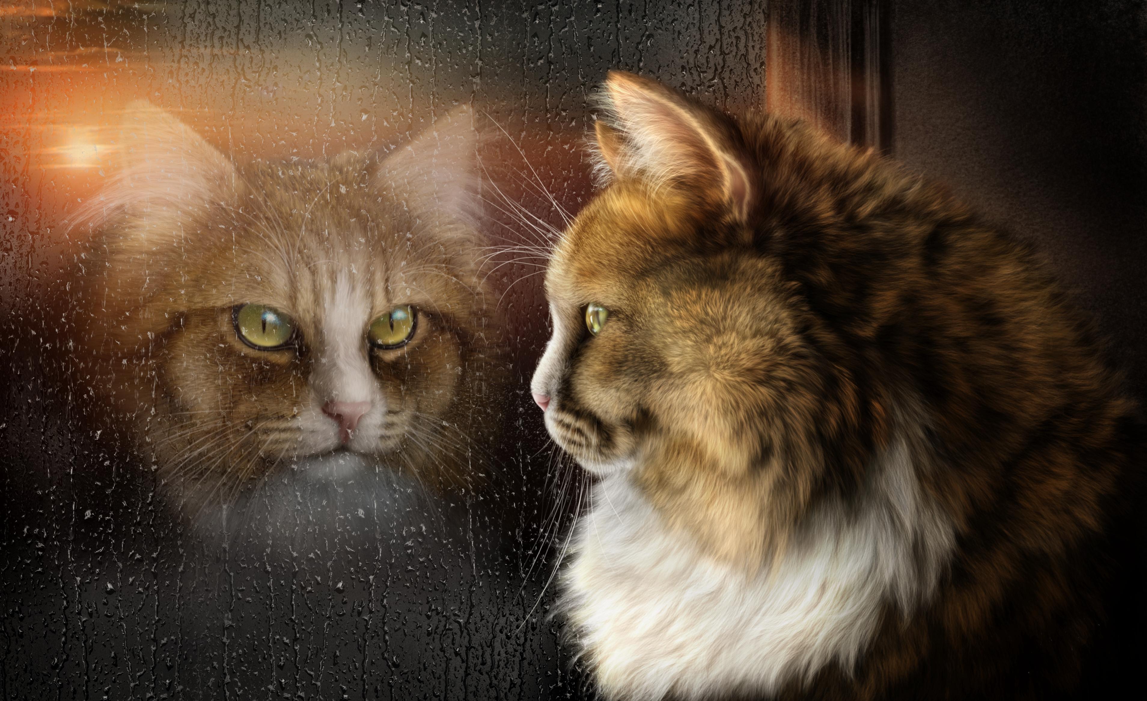петроглифы красивые картинки котов фэнтези огромный