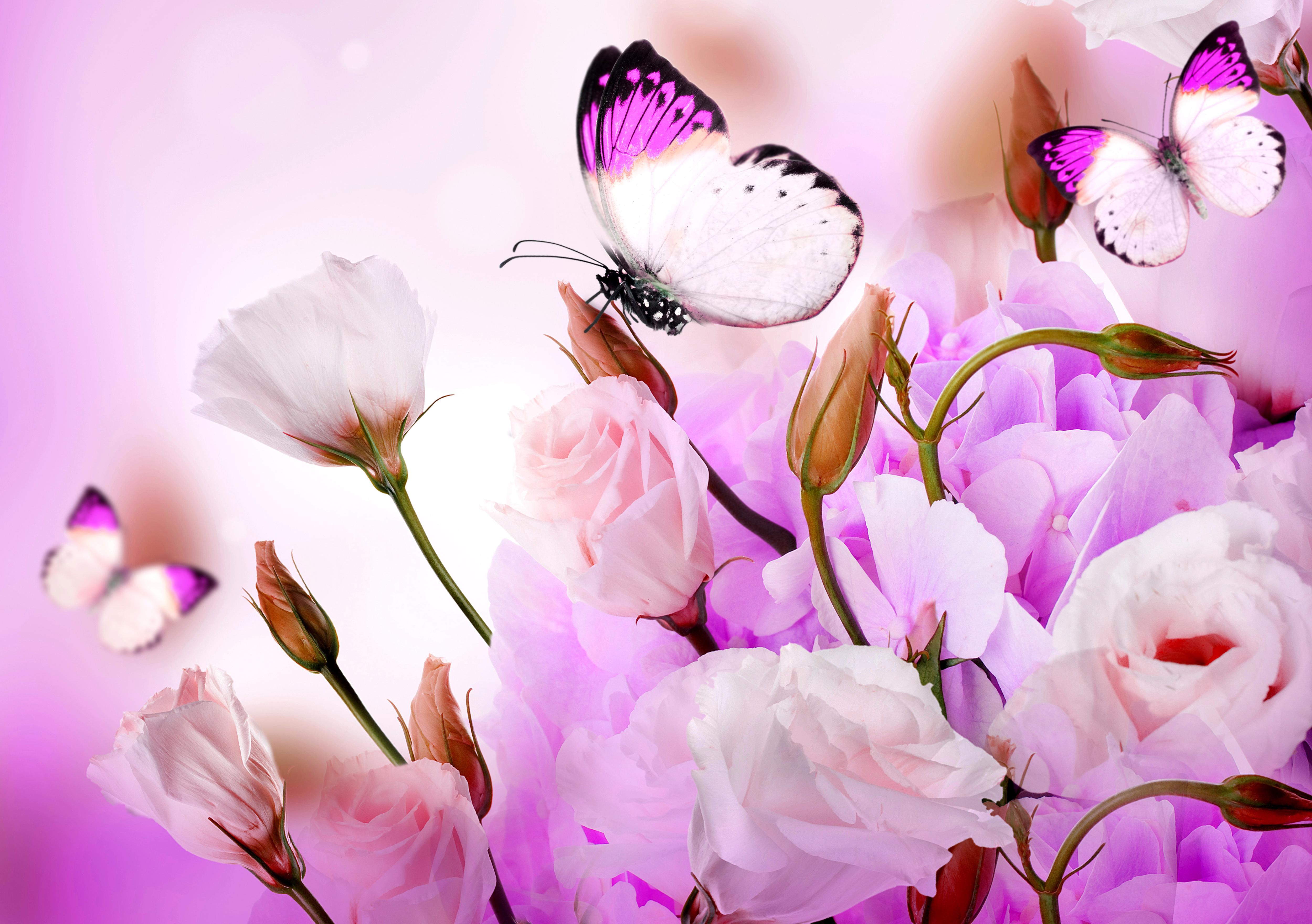 Картинки с бабочками и цветы