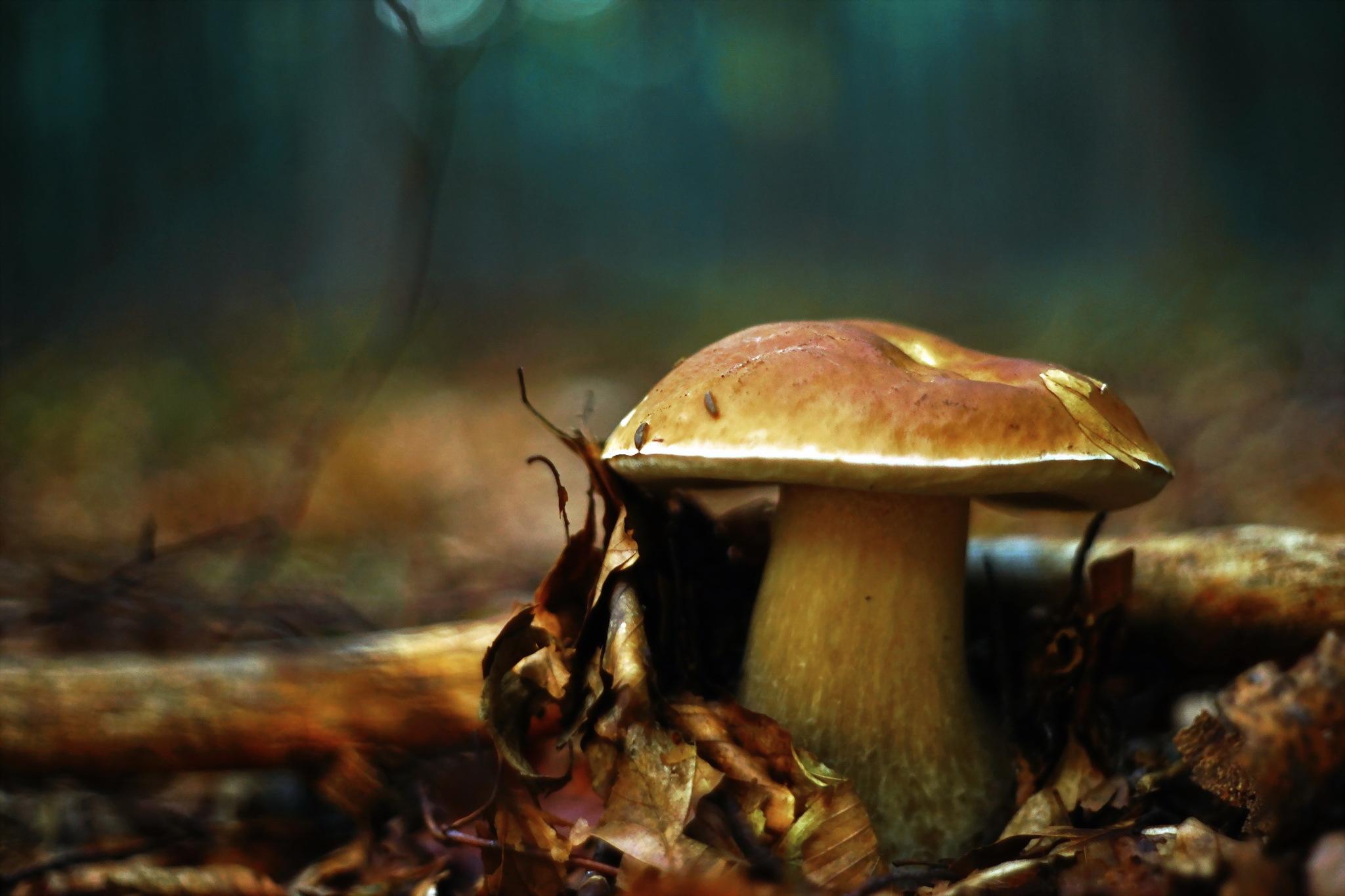 вашему фото грибы в лесу на рабочий стол снять квартиру без