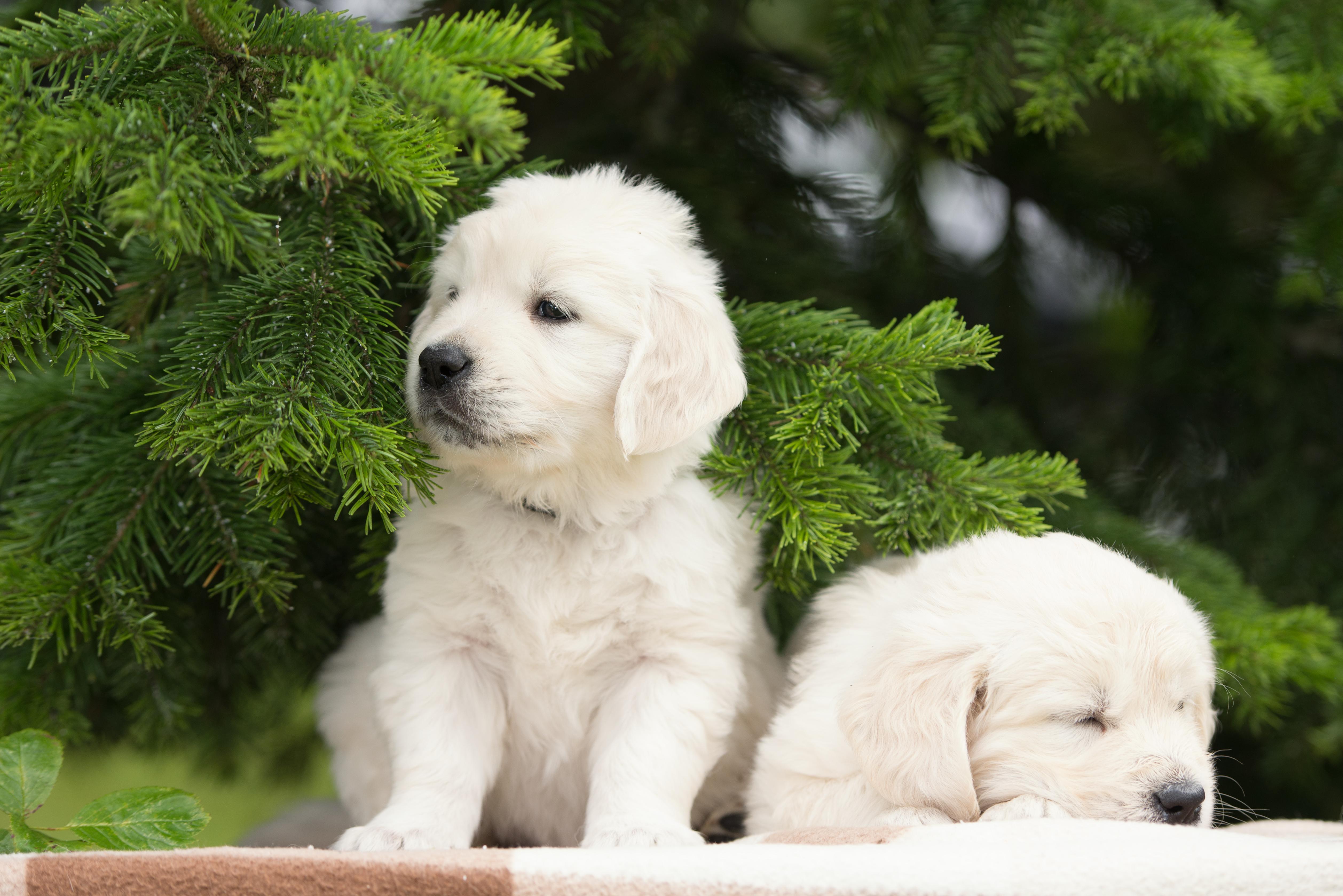 Картинки щенки с собакой