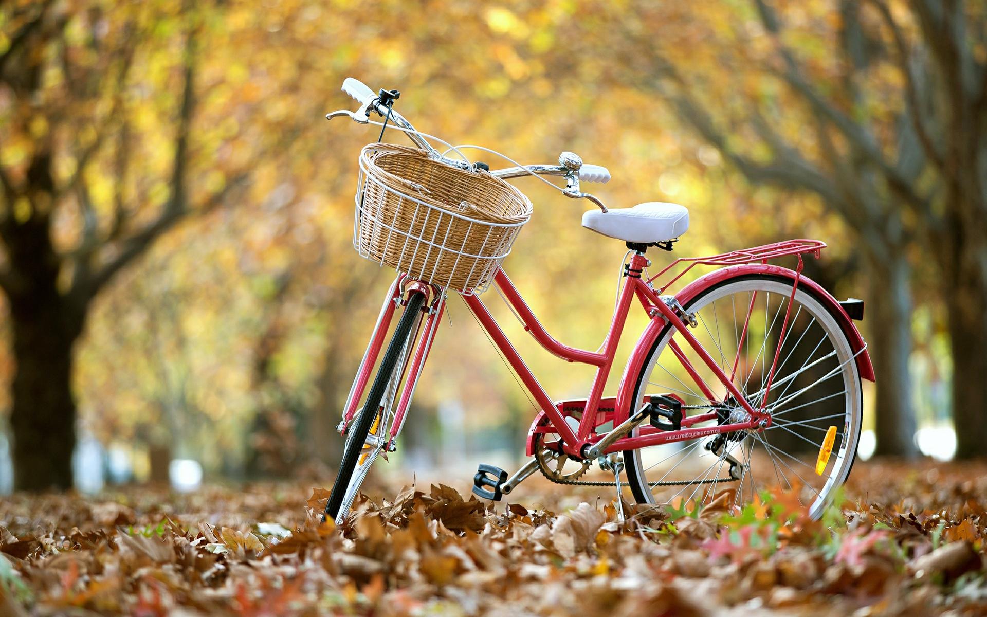 молодожены решили картинки яркие велосипеды субботу вечером