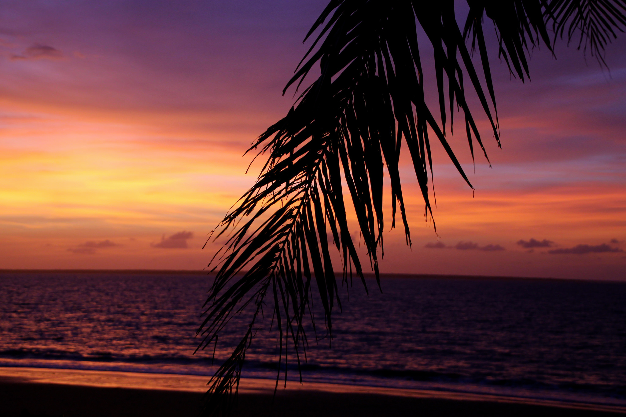 ней, красивые картинки с пальмами и закатом масок станет