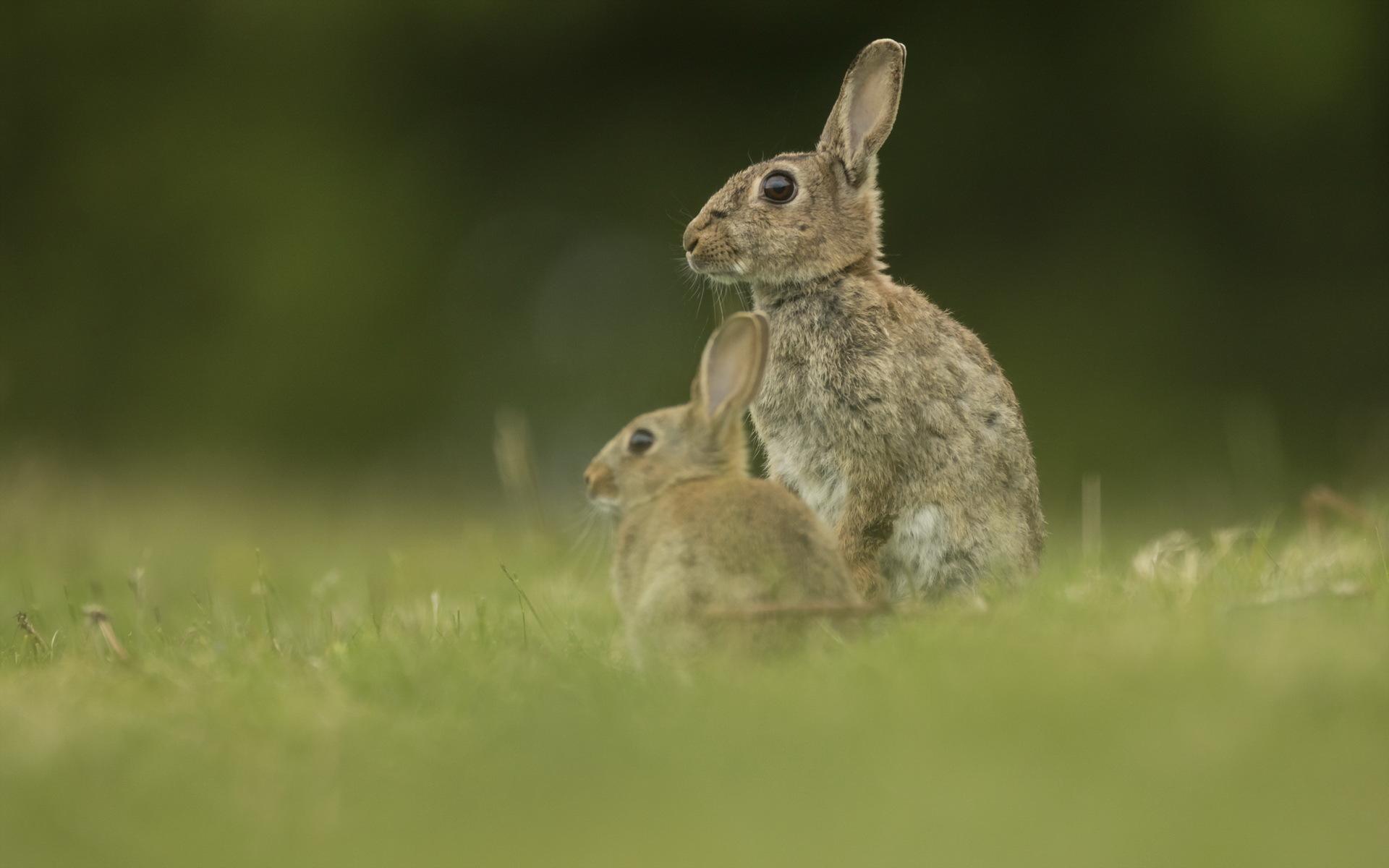 Картинки заяц и малыш