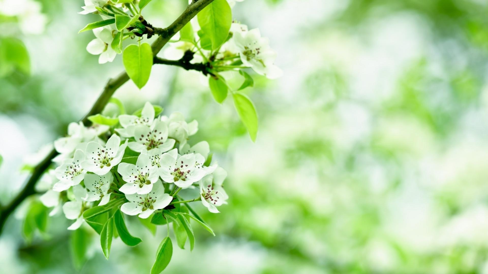 цветы весна ветки скачать