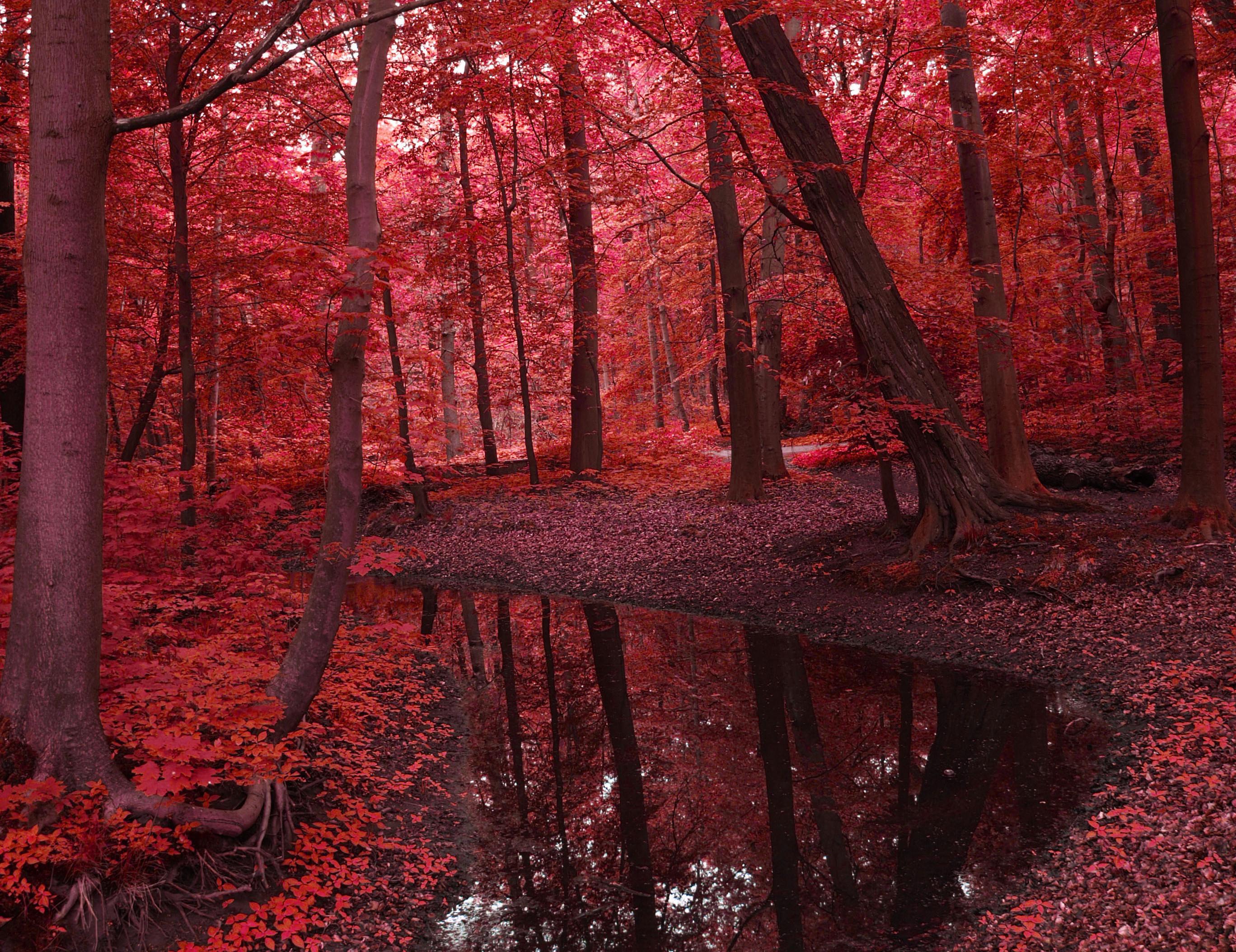Красная природа картинки