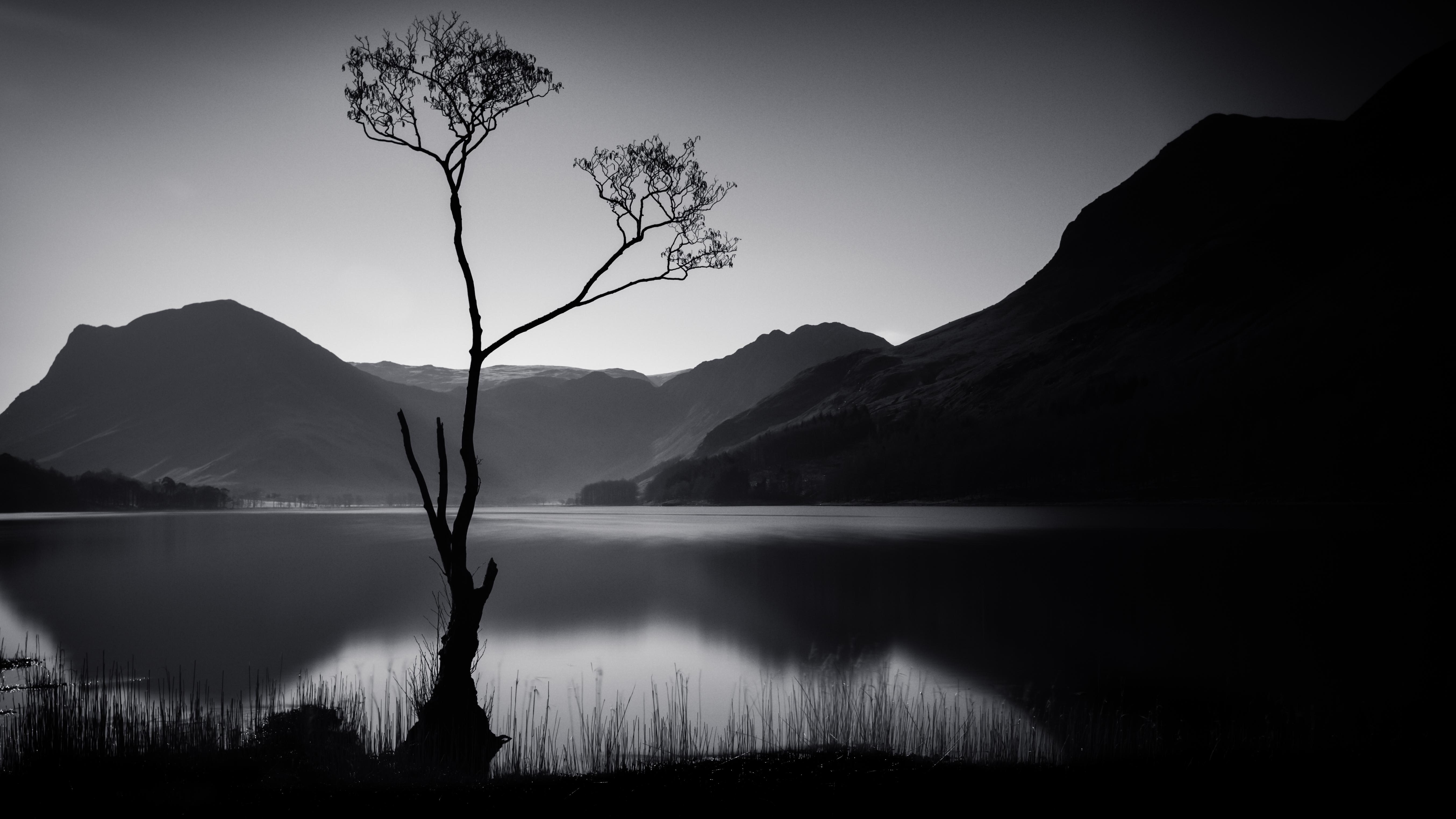 хвалят черно белые картинки на телефон природа представлена одна