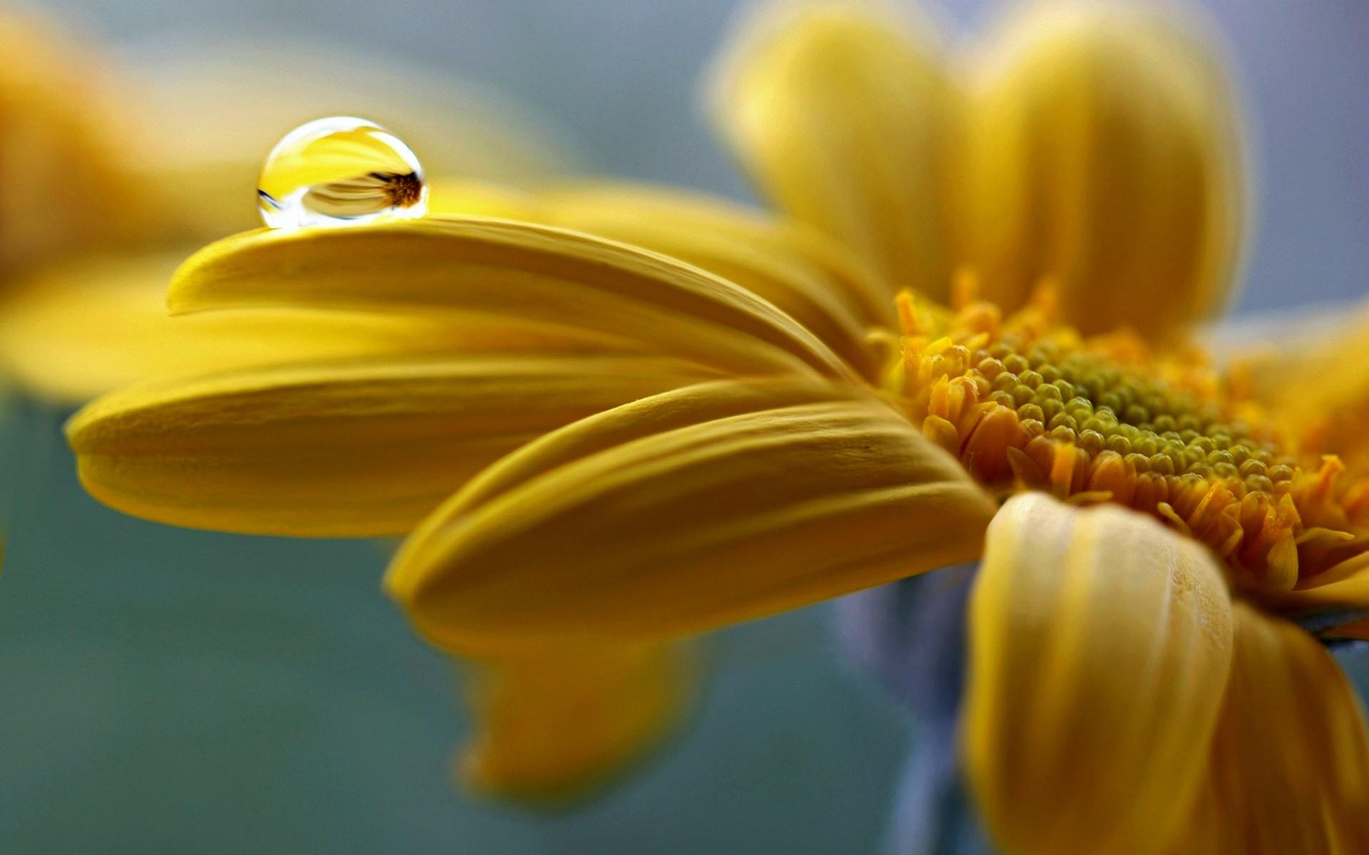 Желтые фотообои картинки