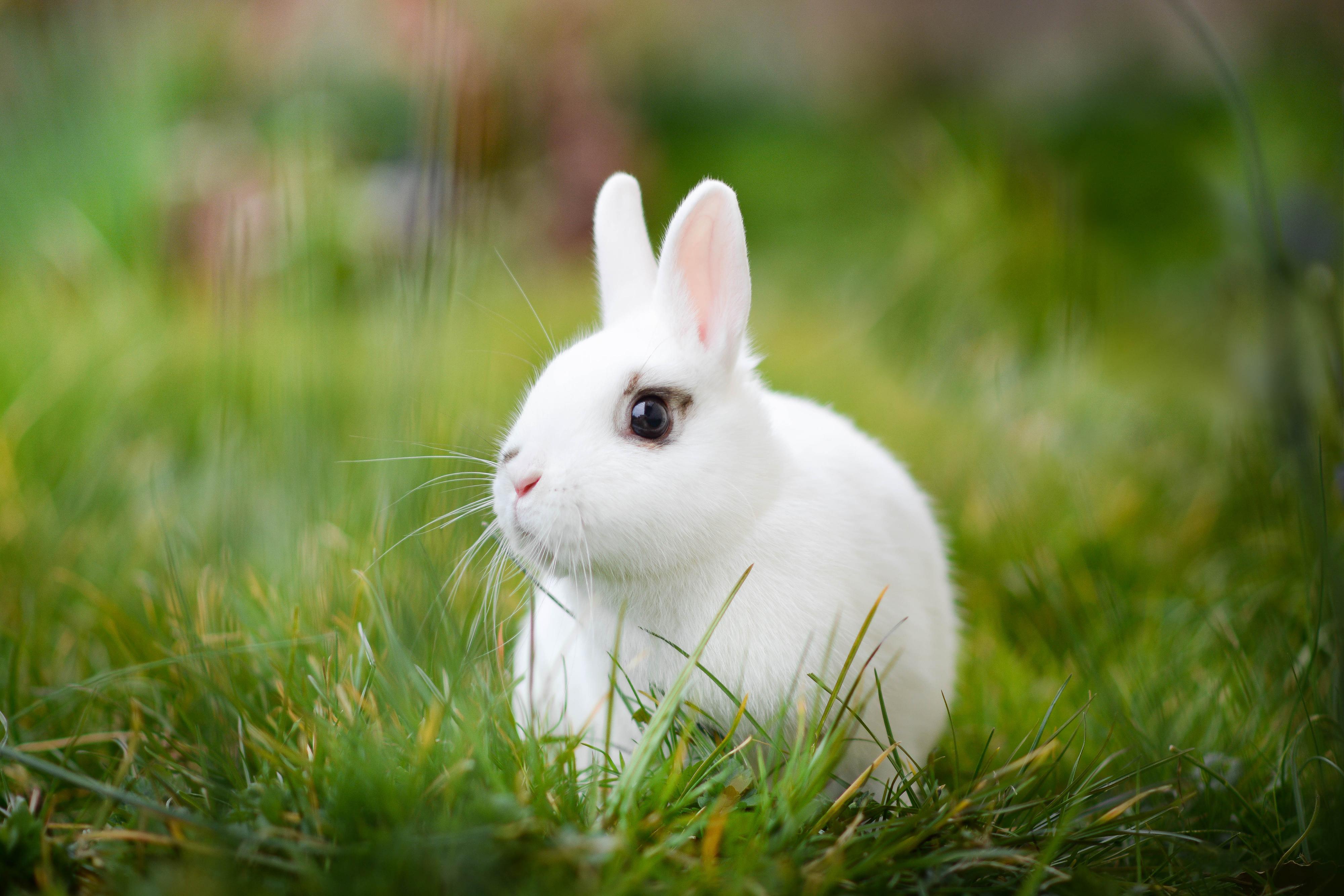 красивый кролик фото так ему