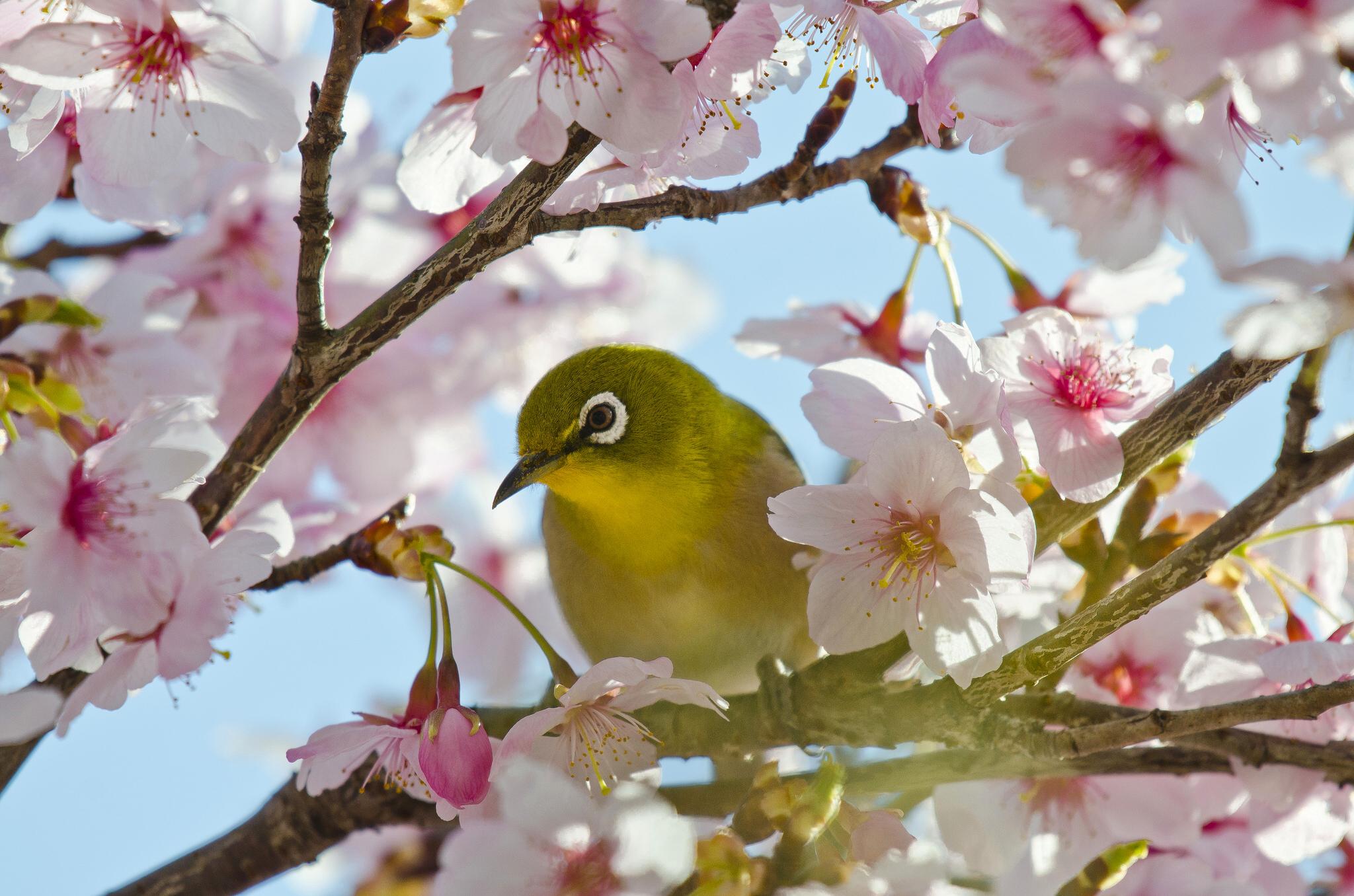 картинки весны для планшета домики бруса прекрасный