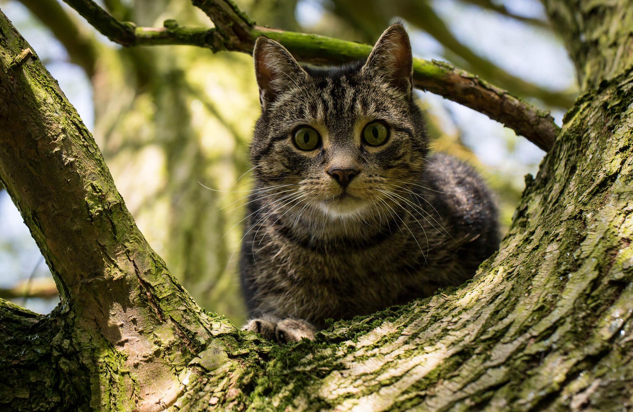 моему сожалению фото кошек на дереве операции