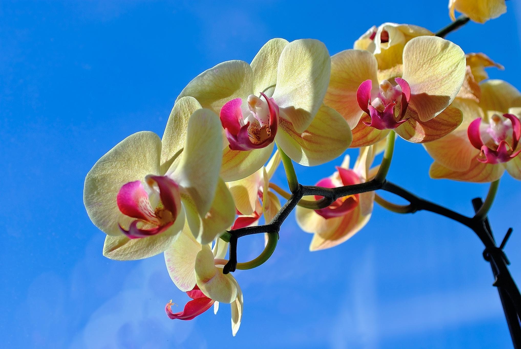 Картинки с орхидеями большого разрешения