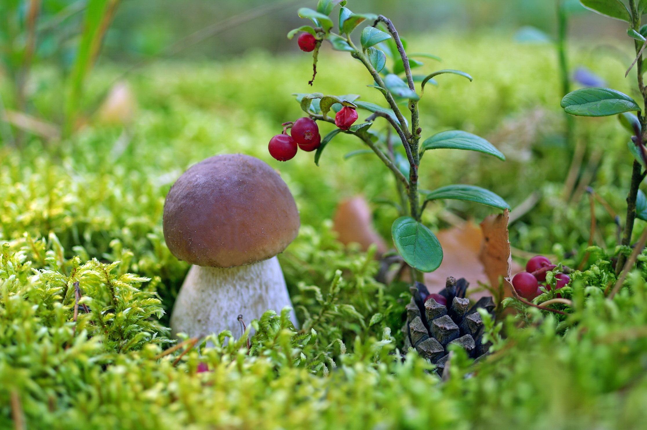 Ягоды грибы в лесу картинки