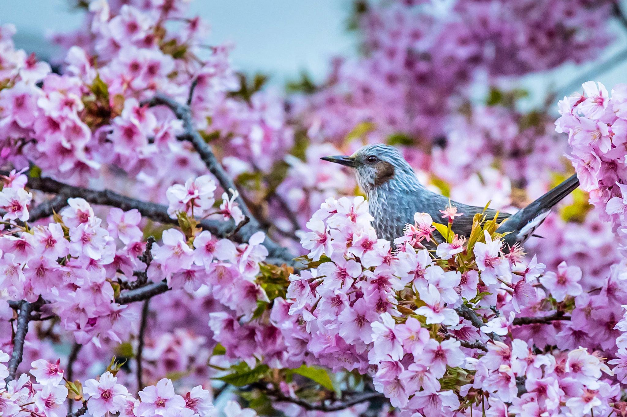 весна картинки интересные хочу рассказать