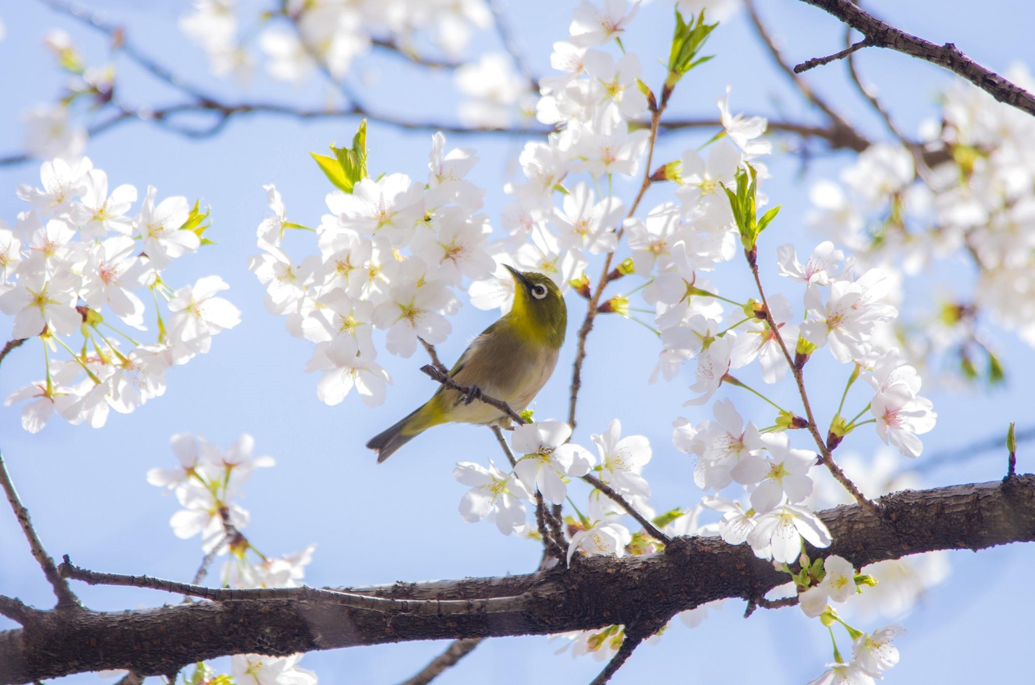 честно говоря, смотреть картинки про весну нужно