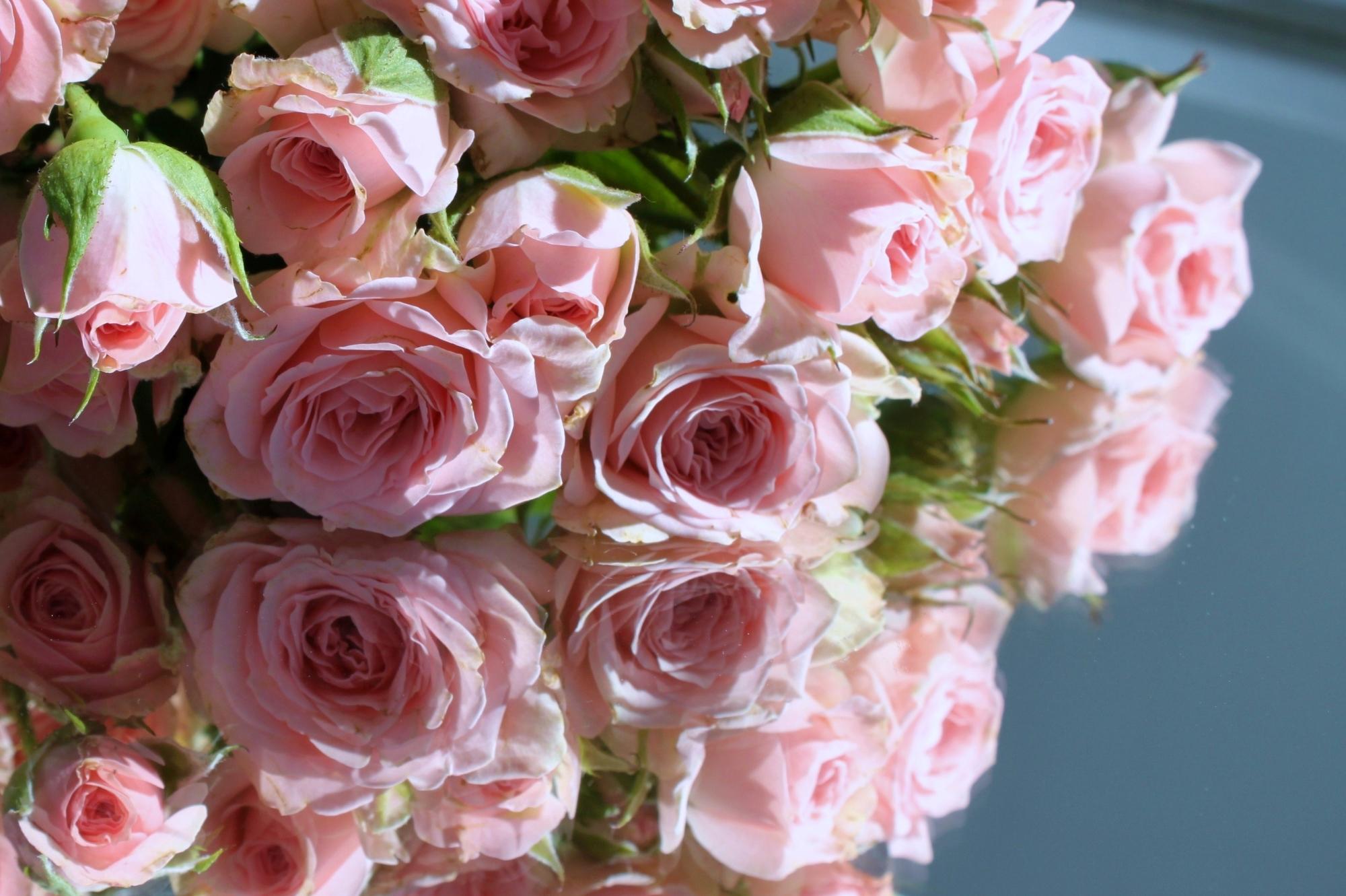 картинка на рабочий стол розы нежные розы много негров